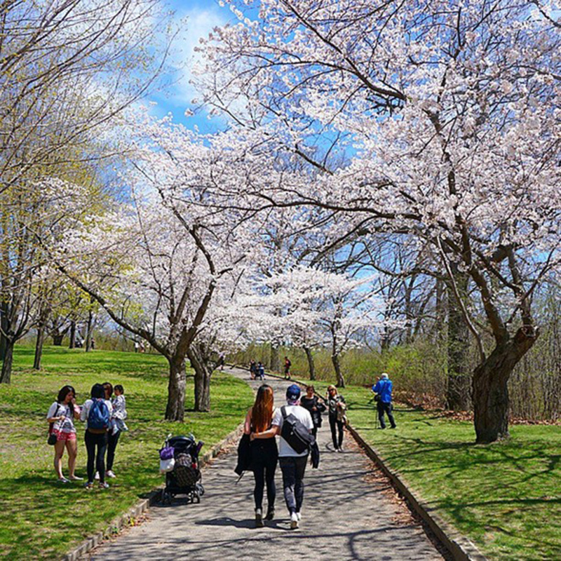 how to get to cherry blossom high park
