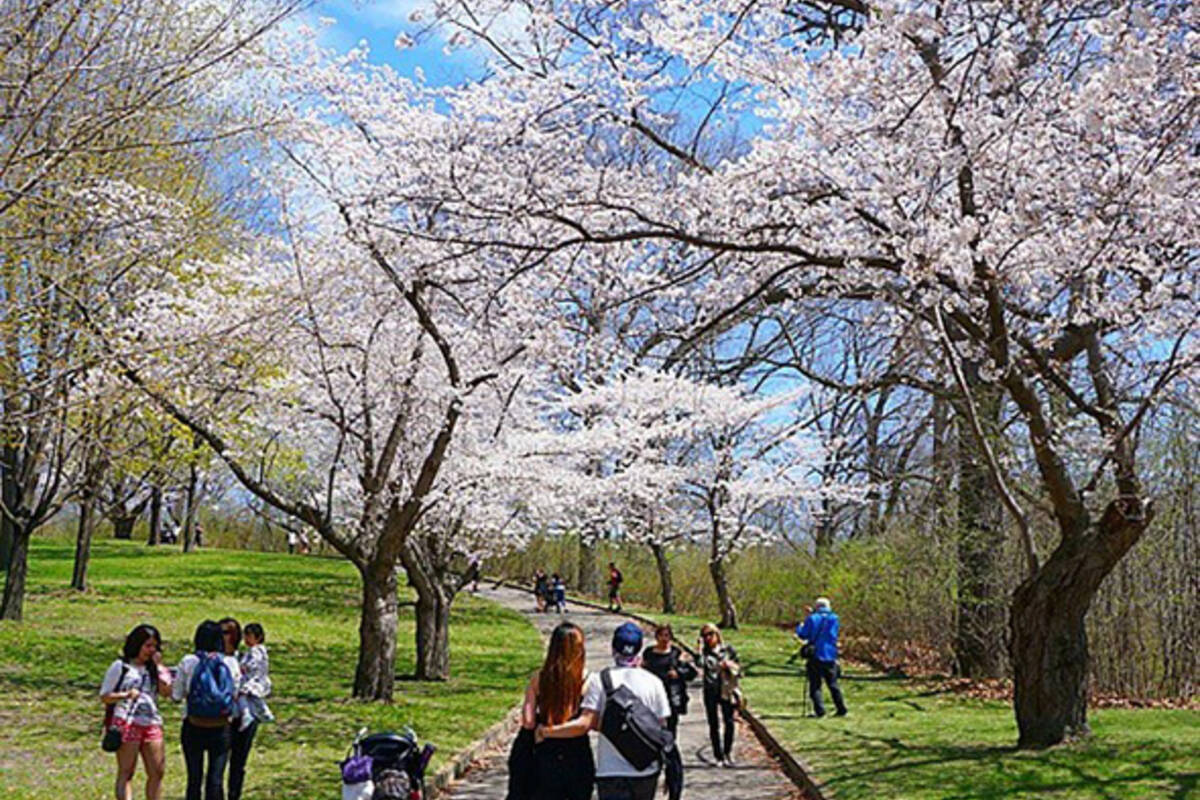 how to get to cherry blossom high park