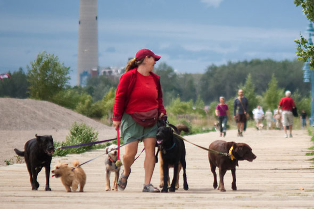 dog walking services toronto