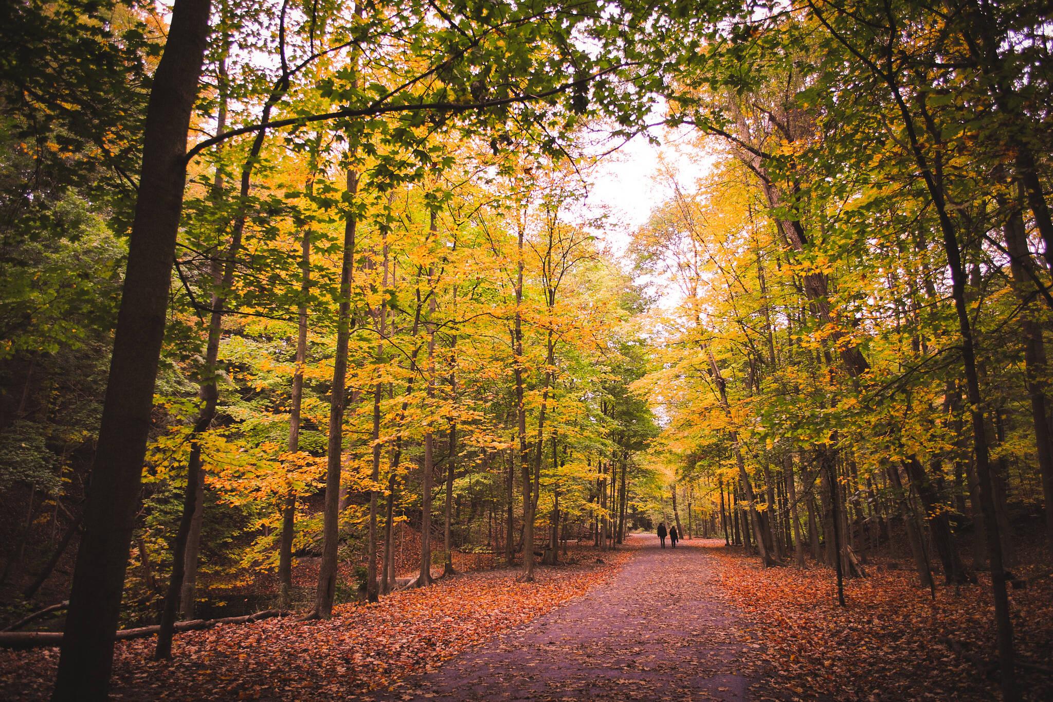 fall leaves toronto
