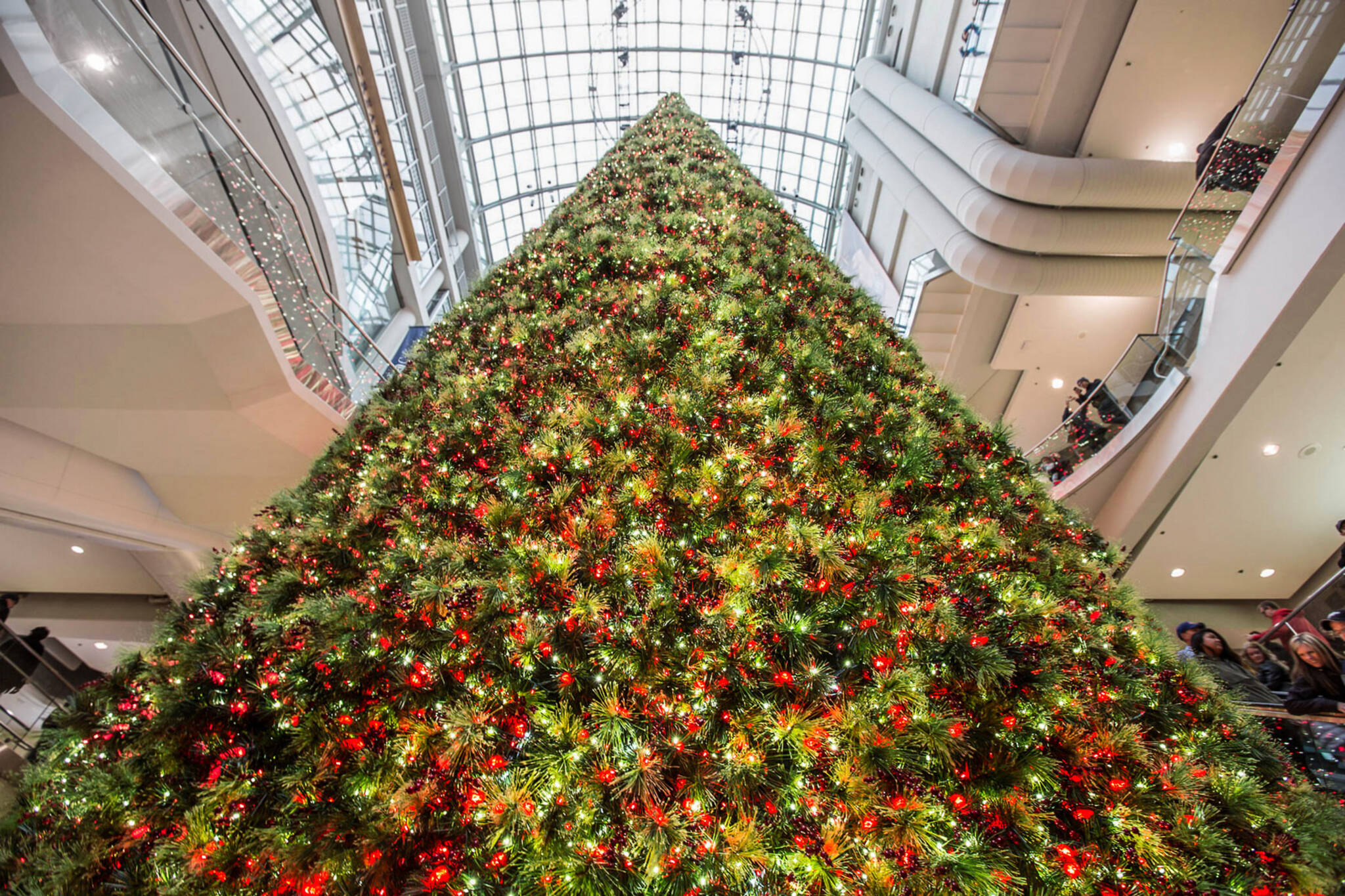 Toronto Is Getting An Epic 100 Foot Christmas Tree This Year