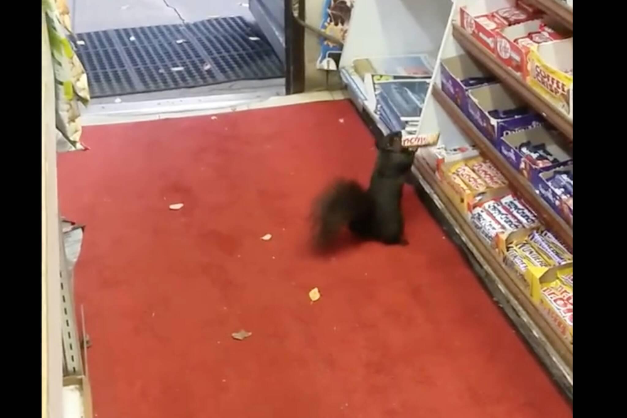 chocolate bar squirrel Toronto
