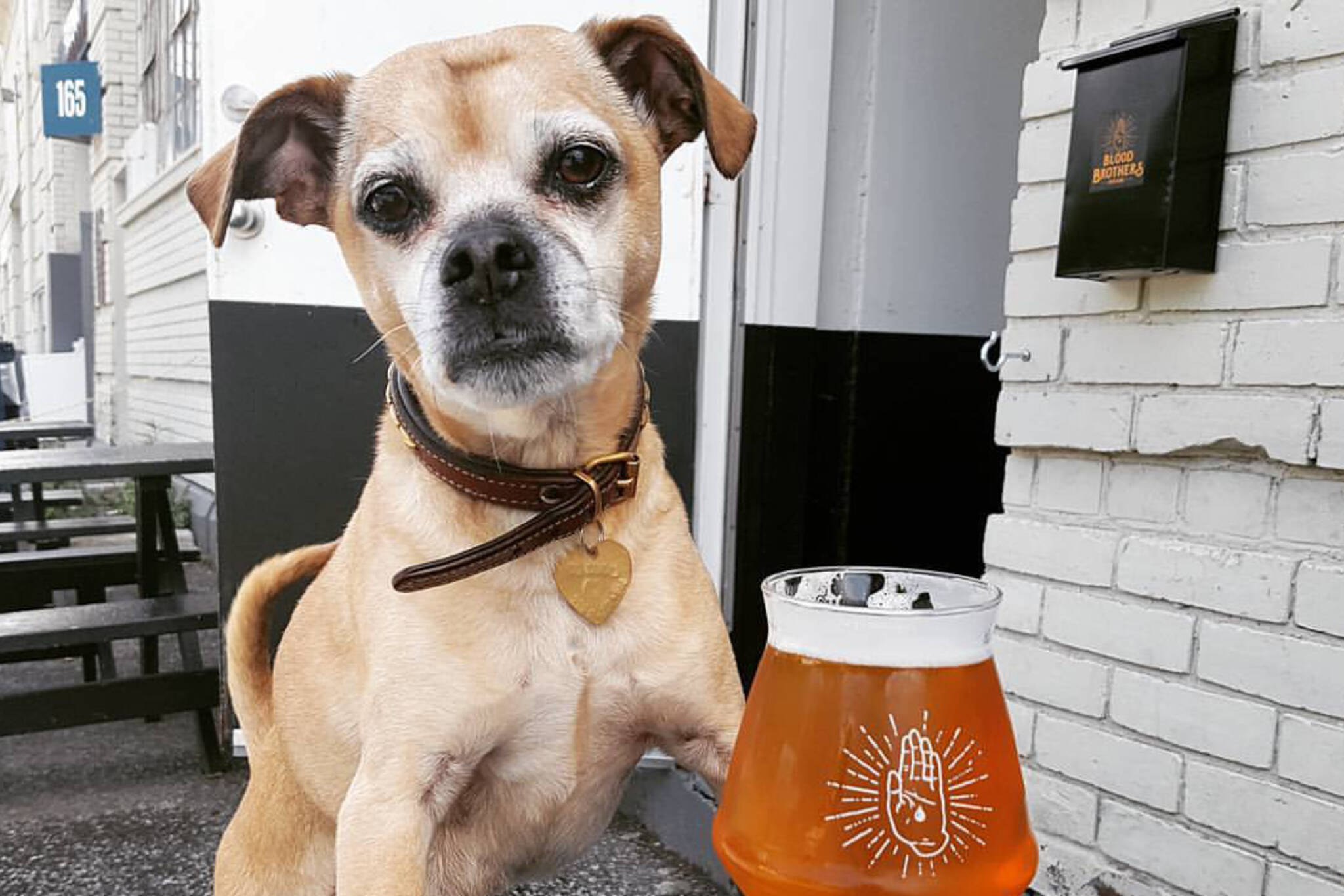 Dog Friendly Patios Toronto