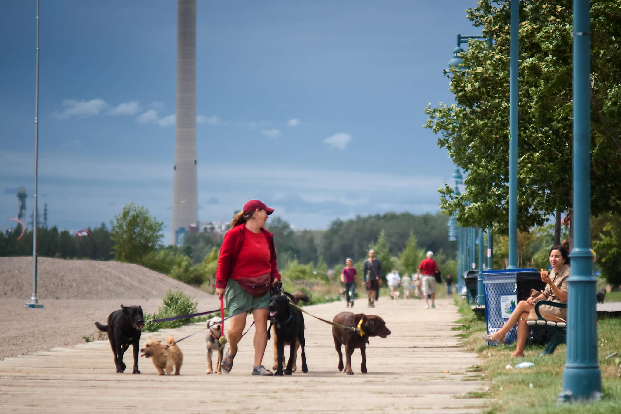 dog walking services toronto