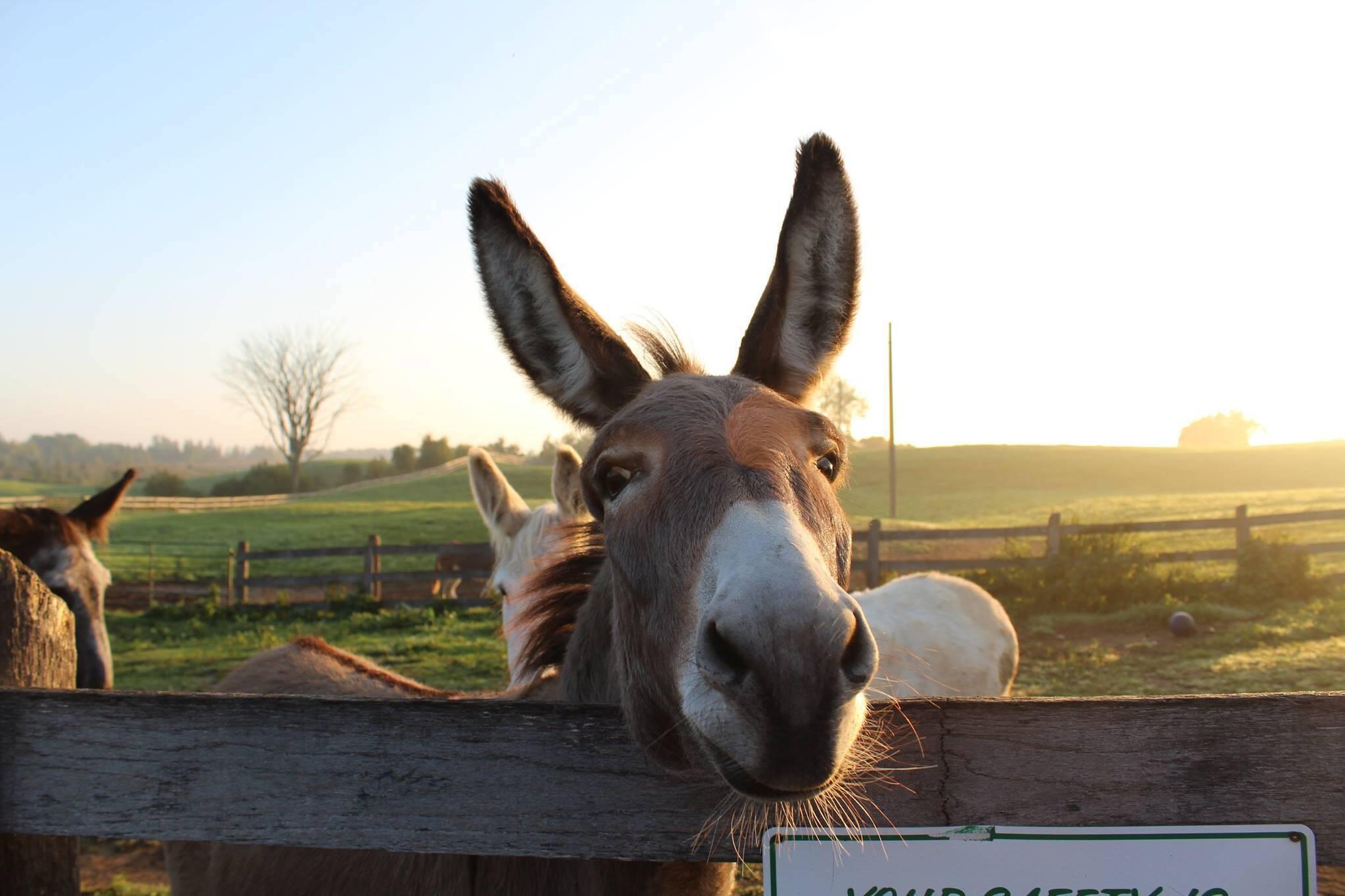 donkey sanctuary canada