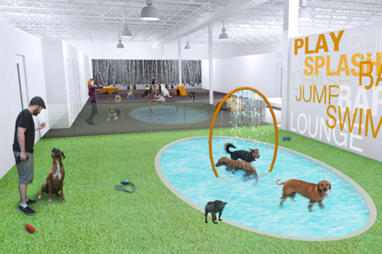 Toronto to get its first luxury dog hotel for Dog friendly hotel nyc