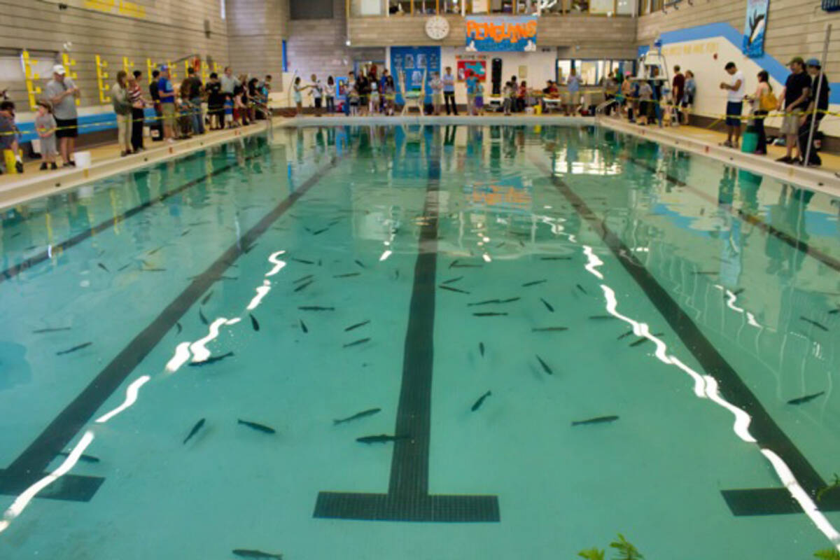 Indoor fishing returns to toronto this weekend for Sport pools pictures