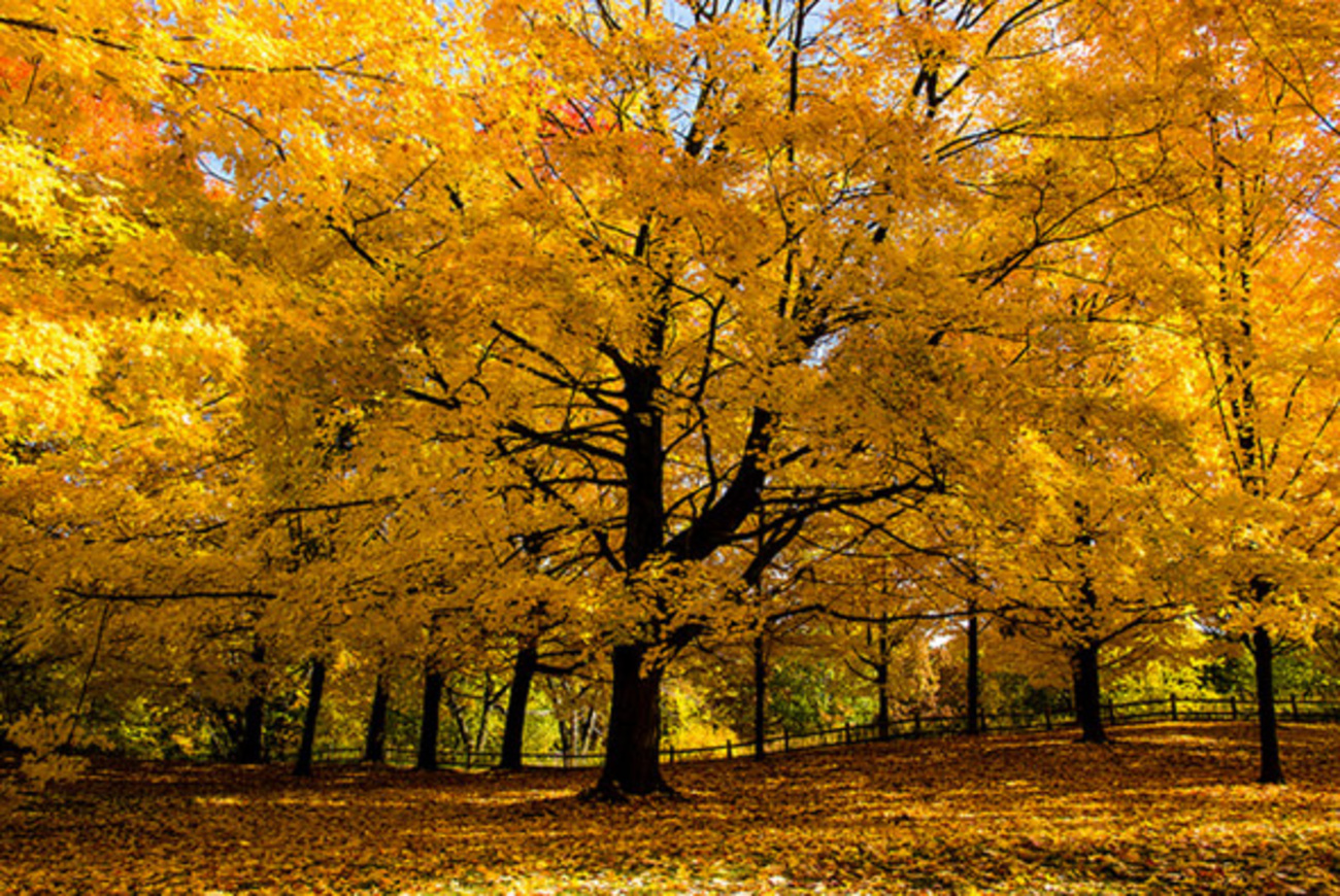 5 Underrated Places To Check Out Fall Colours In Toronto
