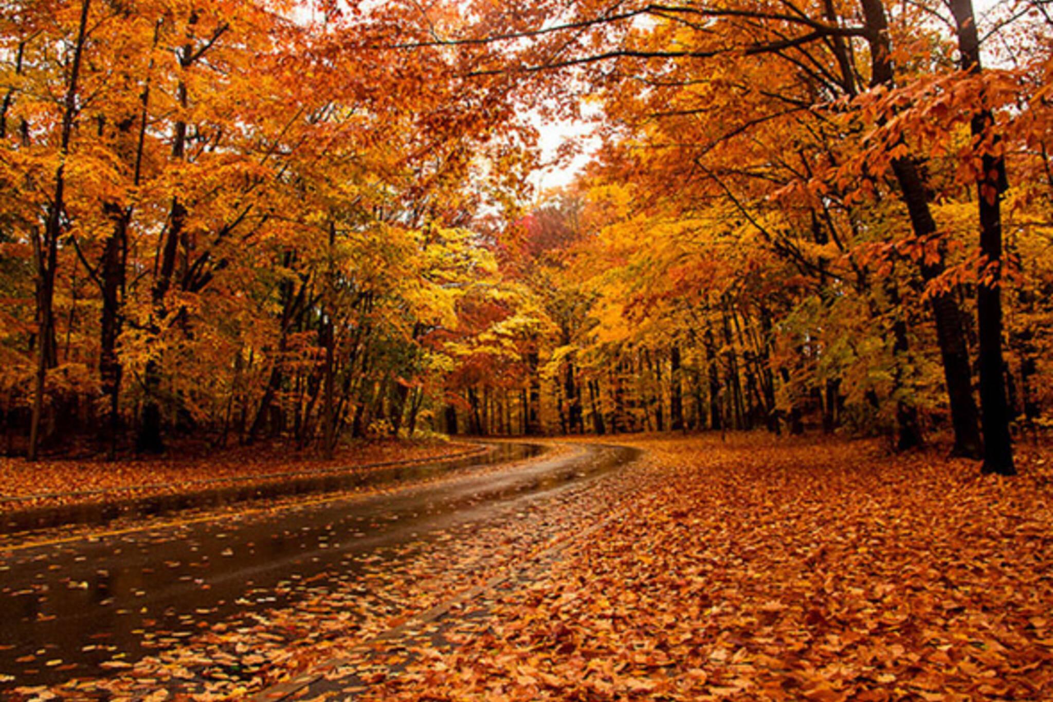 fall foliage toronto