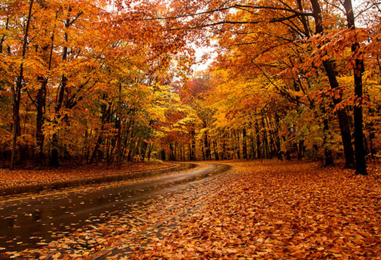 The Top 10 Places To See Fall Foliage In Toronto