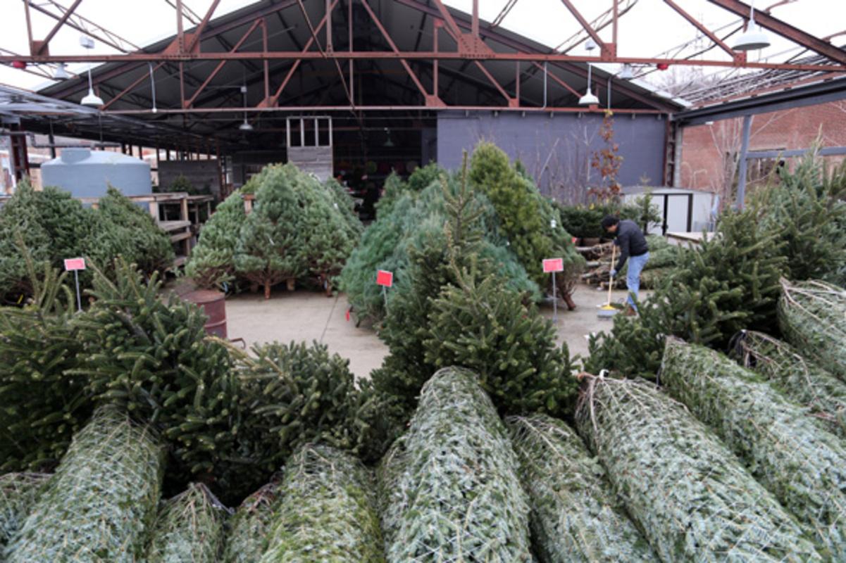 toronto christmas trees