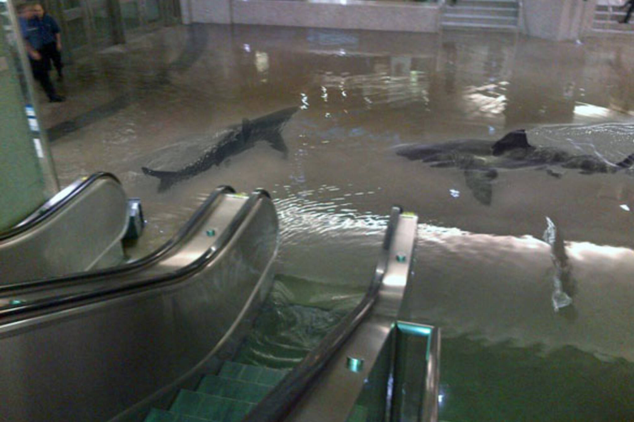 Union Station flood sharks meme