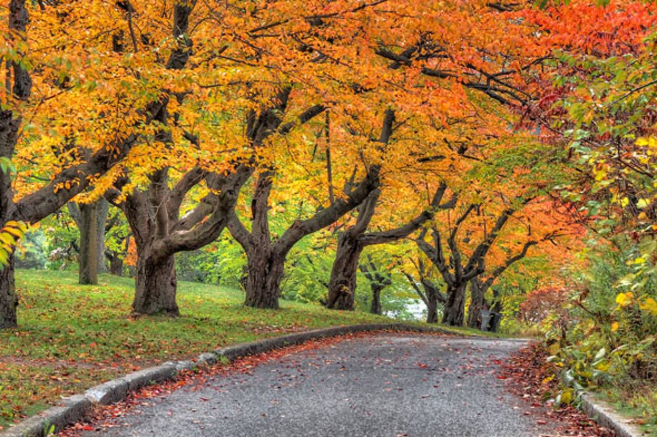 In Photos Fall Colours Brighten Up Toronto