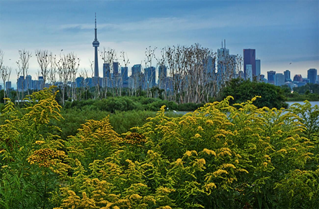 Toronto Snake Island