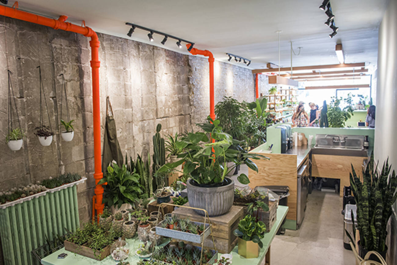 The Top 10 Stores For Indoor Plants In Toronto