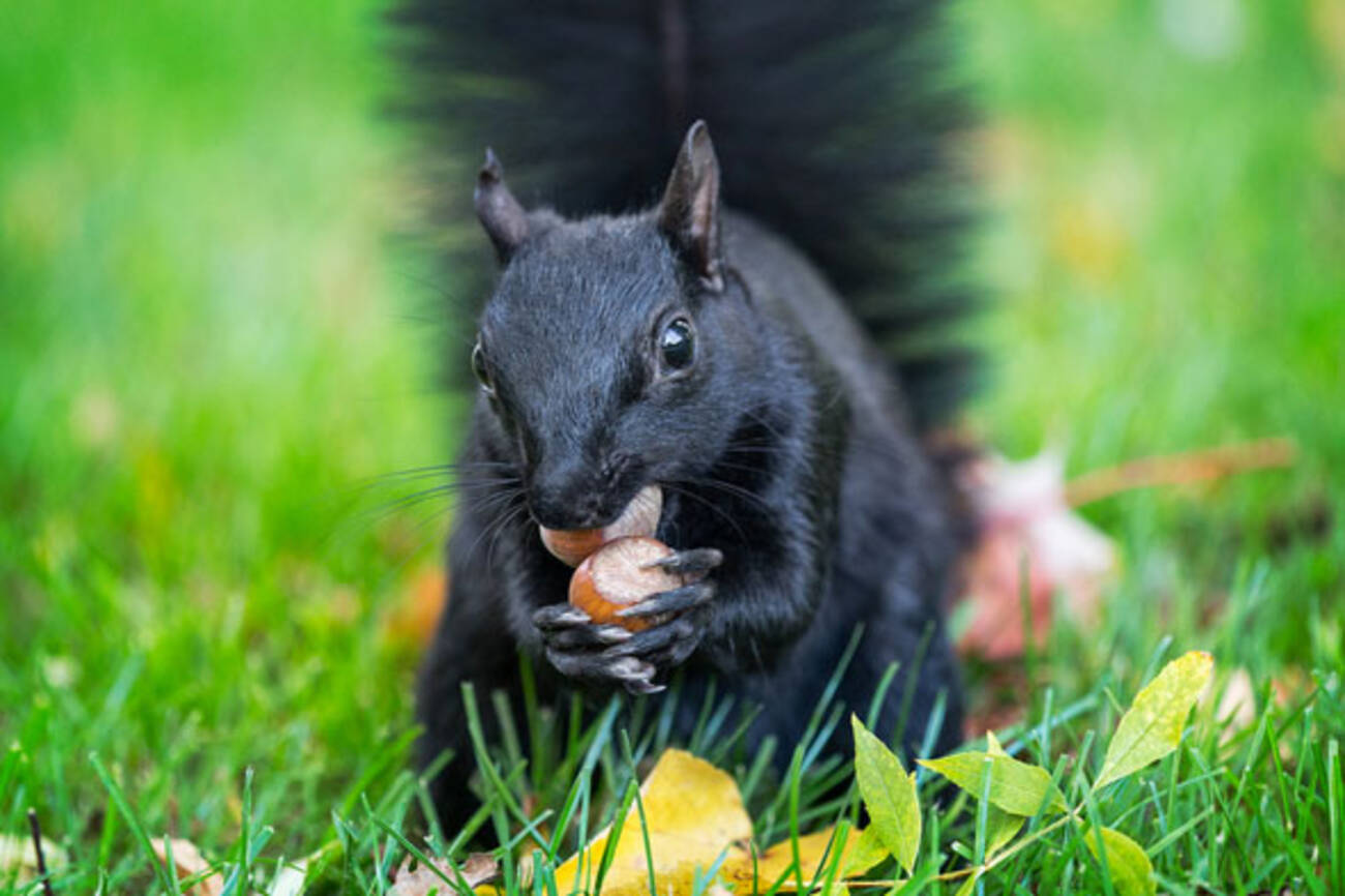 Get To Know The Squirrels Of Toronto