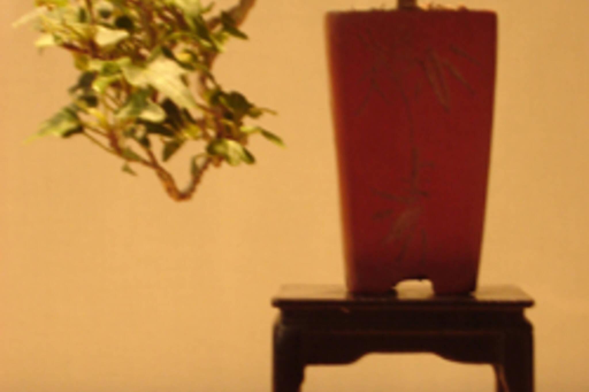 08_10_2007_bonsaishowandsale.jpg