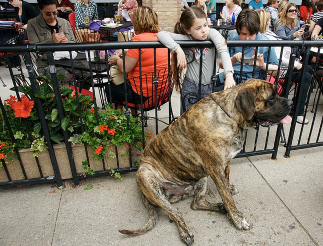 Dog patios Toronto