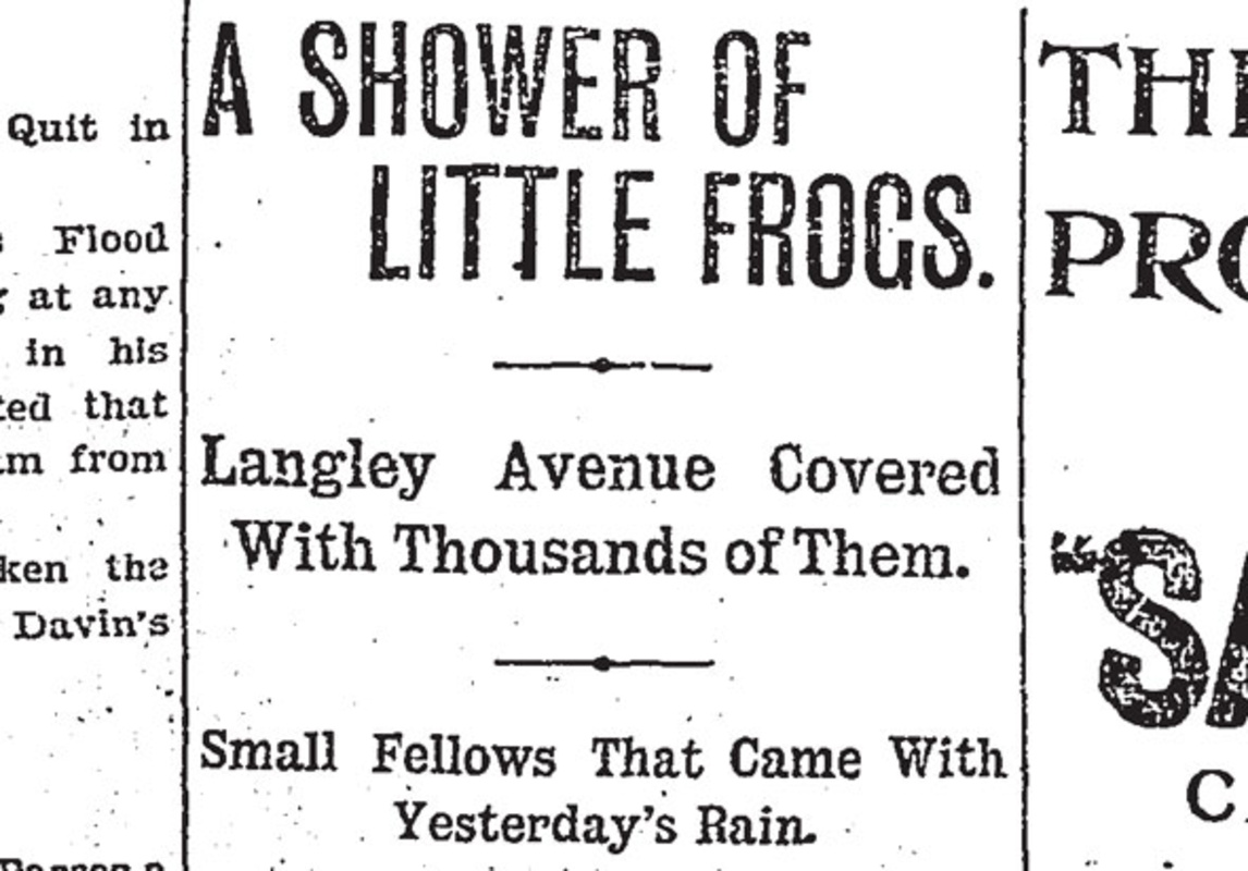 toronto raining frogs