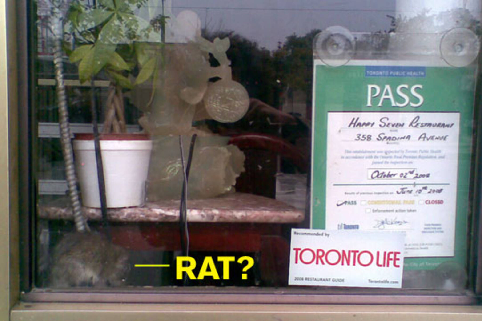Rat Happy Seven