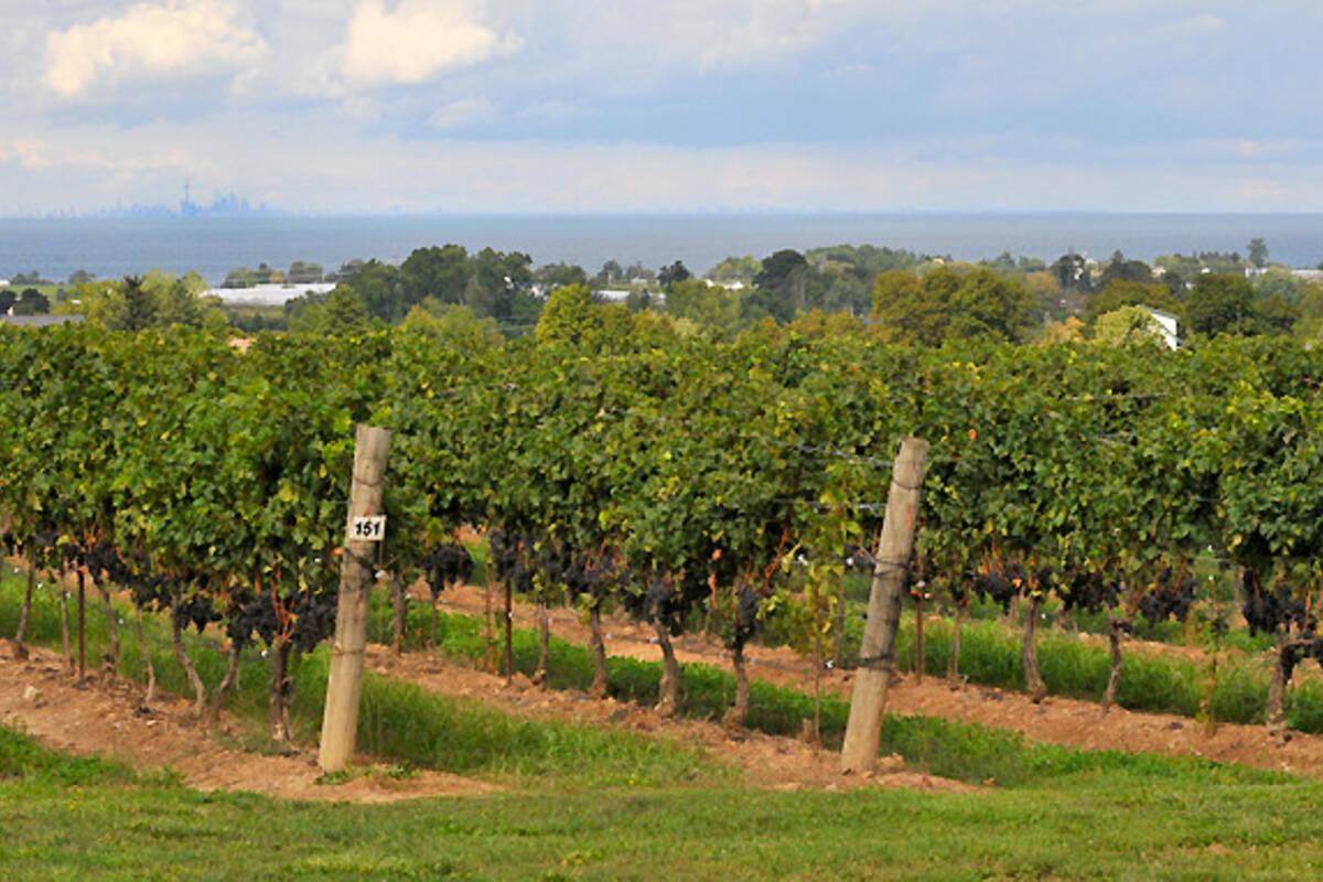 Best Restaurants In Wine Country Ontario