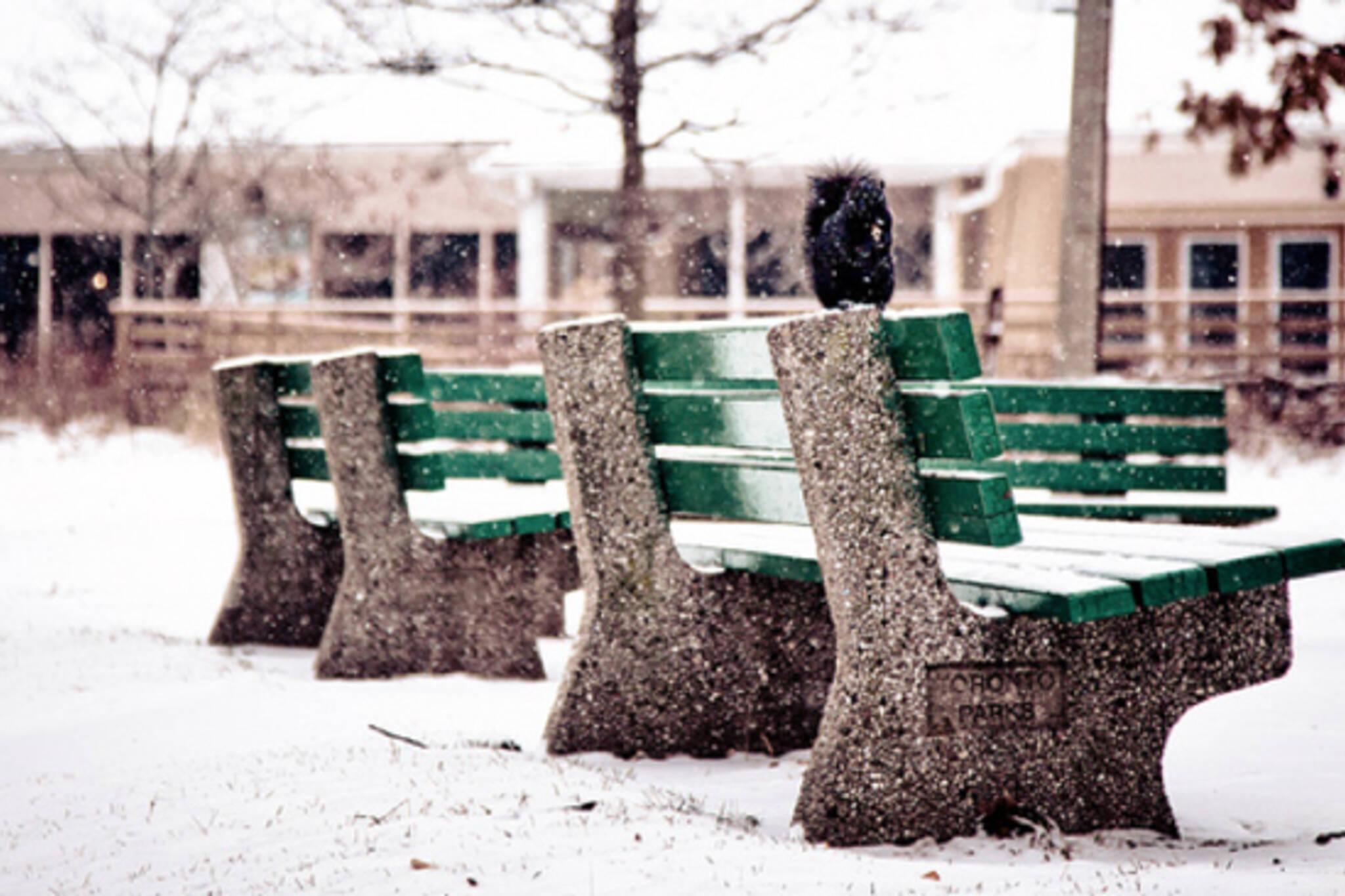 Toronto News Snow