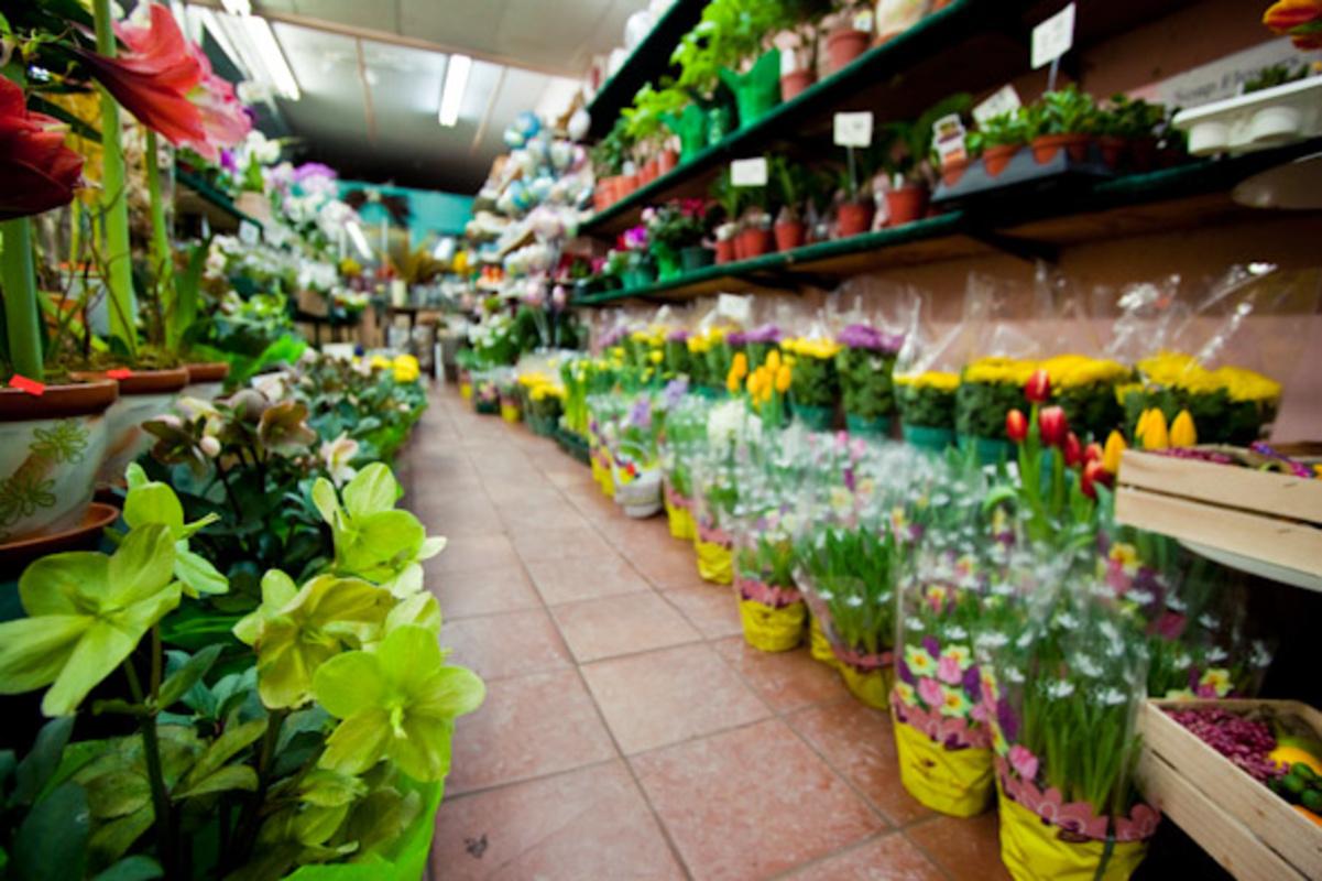 Bloor Village Flowers