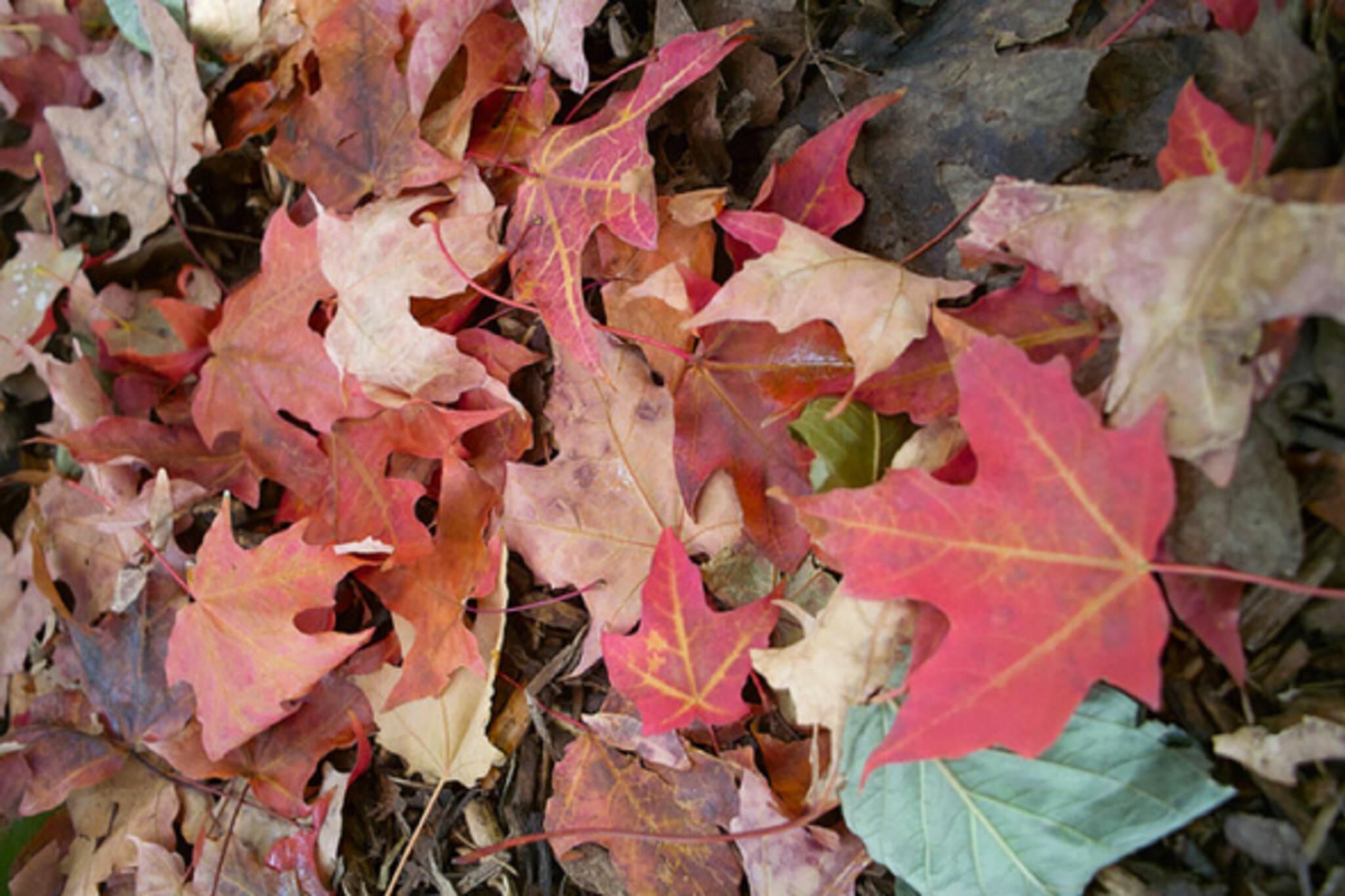 autumn toronto