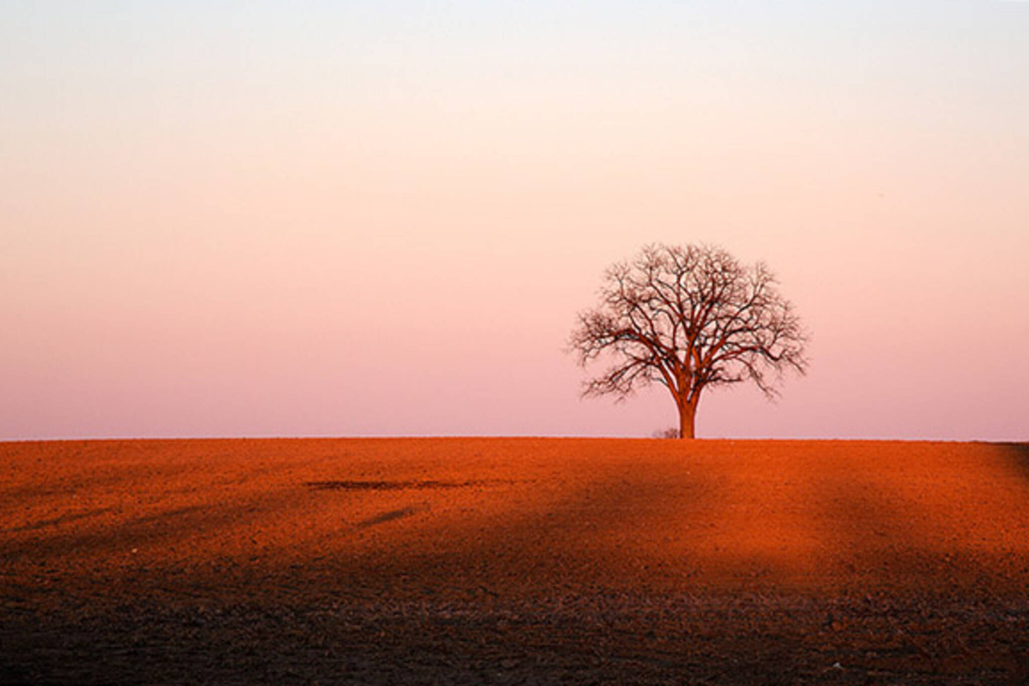 lonely tree sunset
