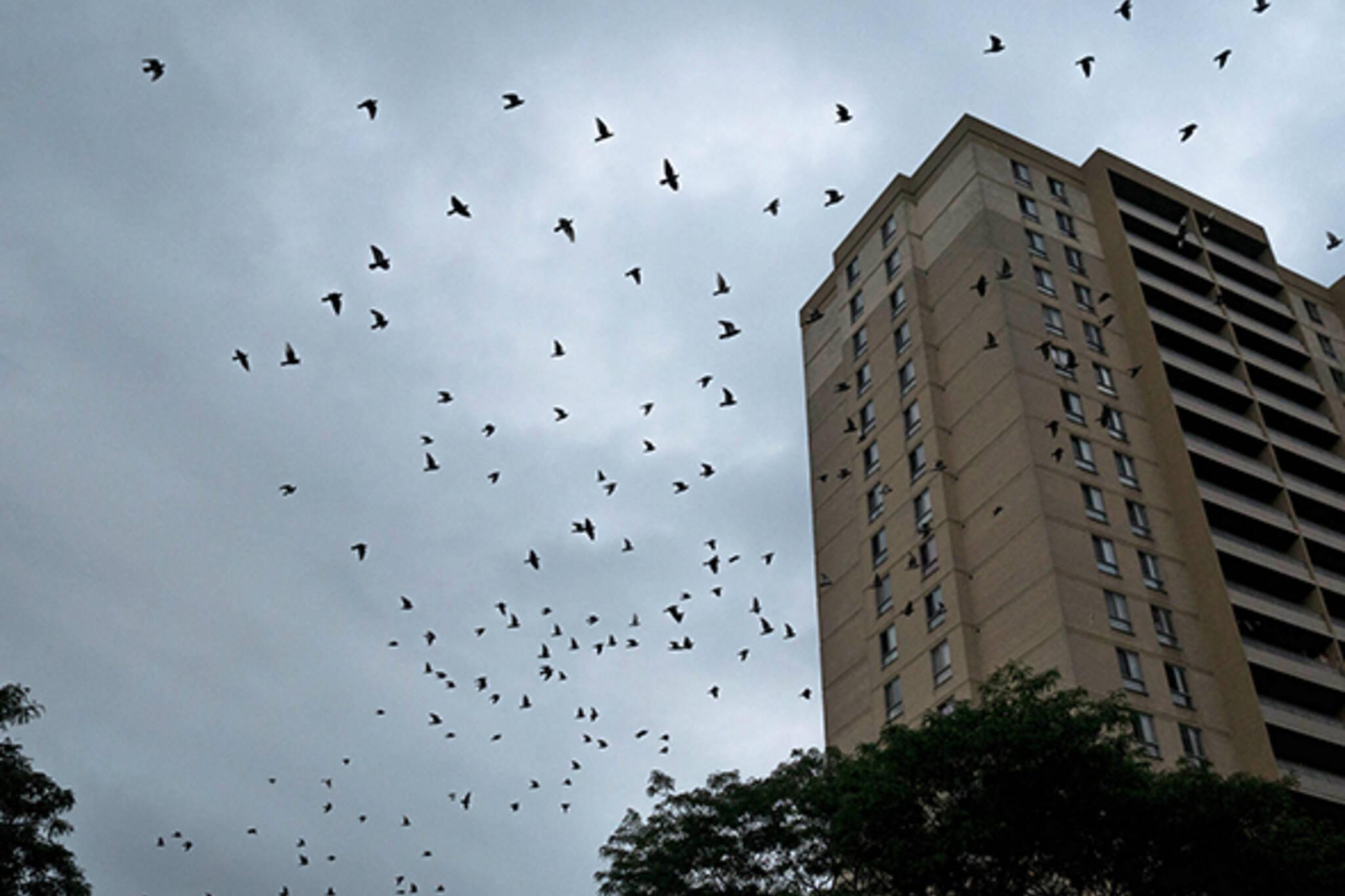 birds toronto