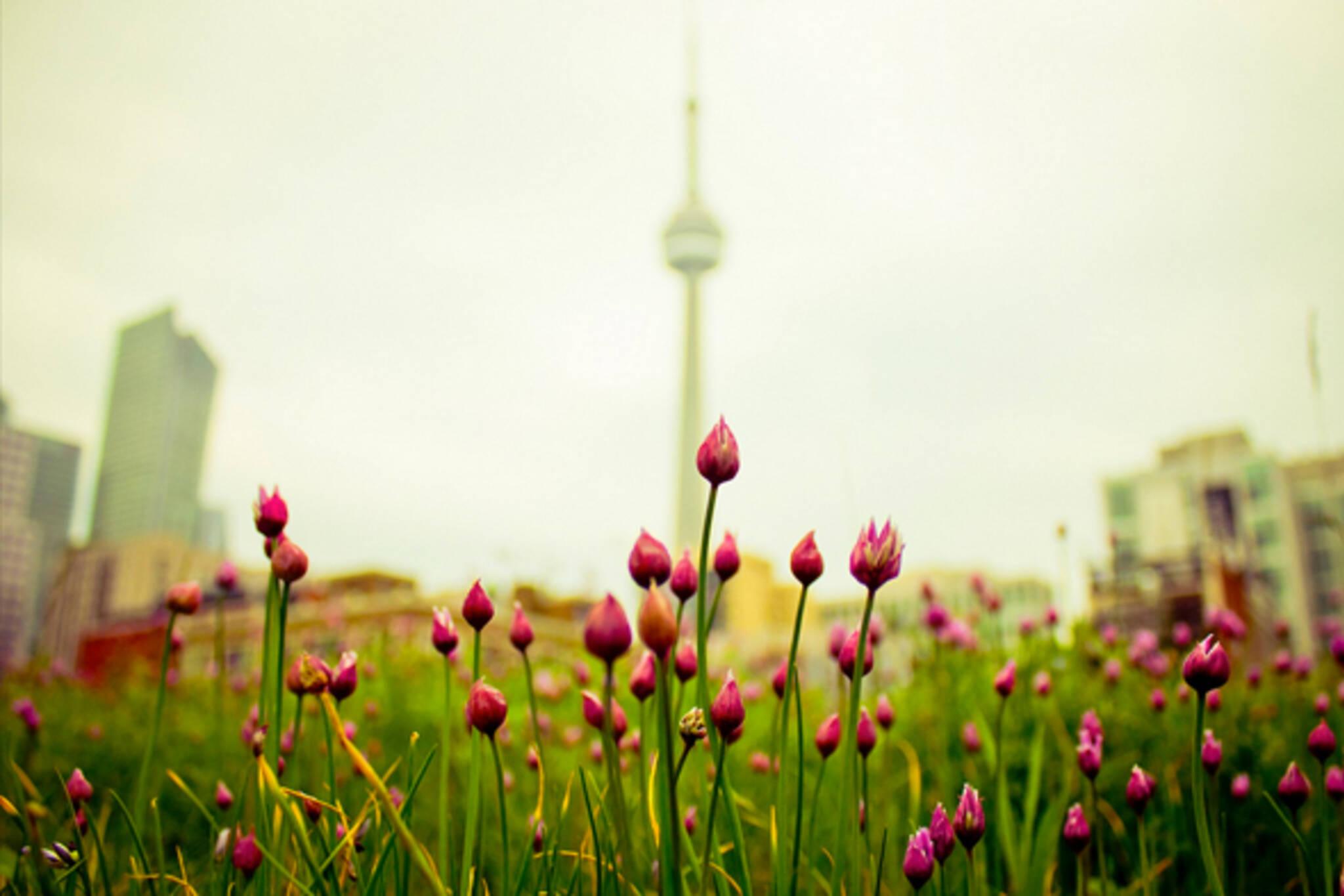 Open closed Victoria Day Toronto