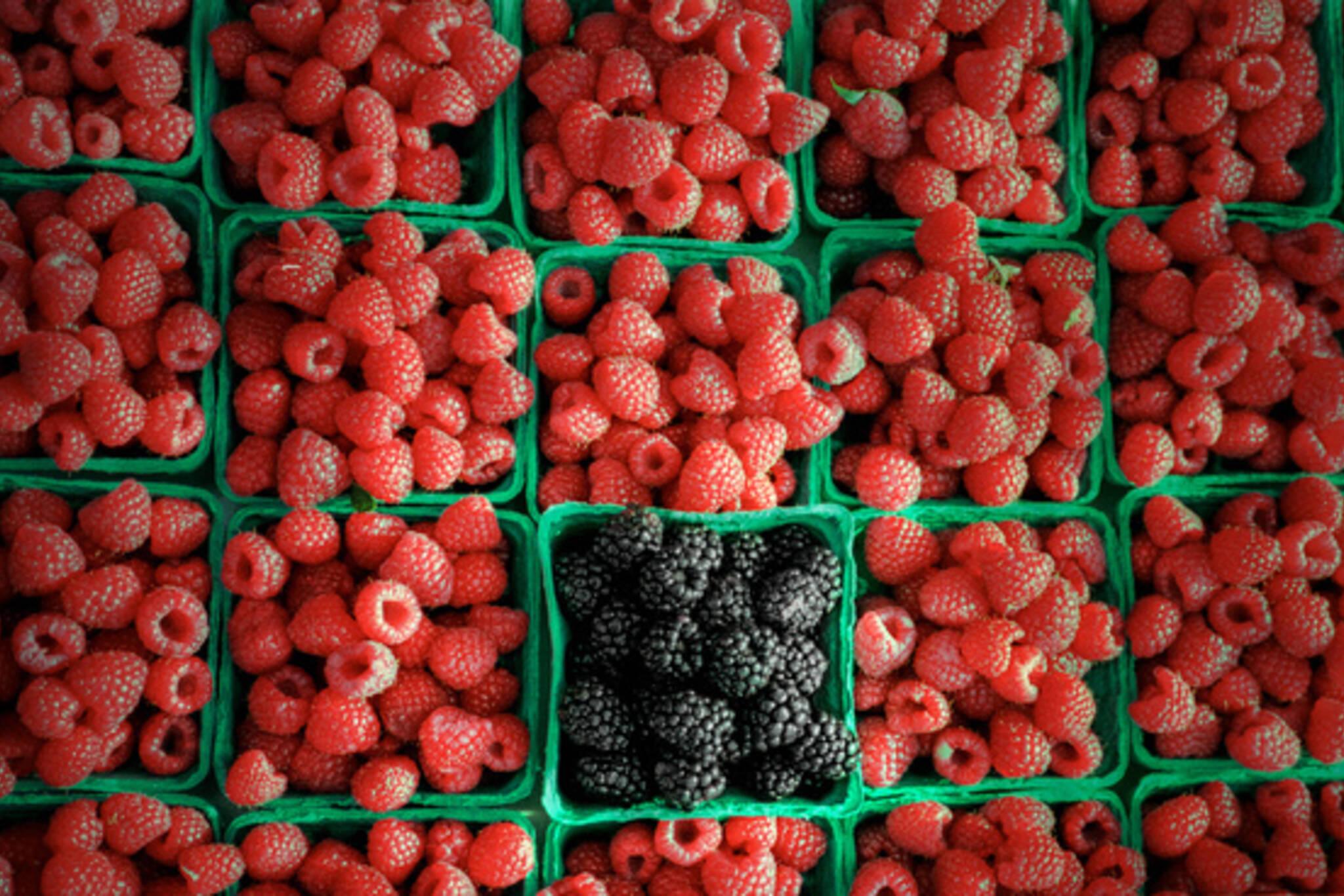 20100401-Raspberries.jpg