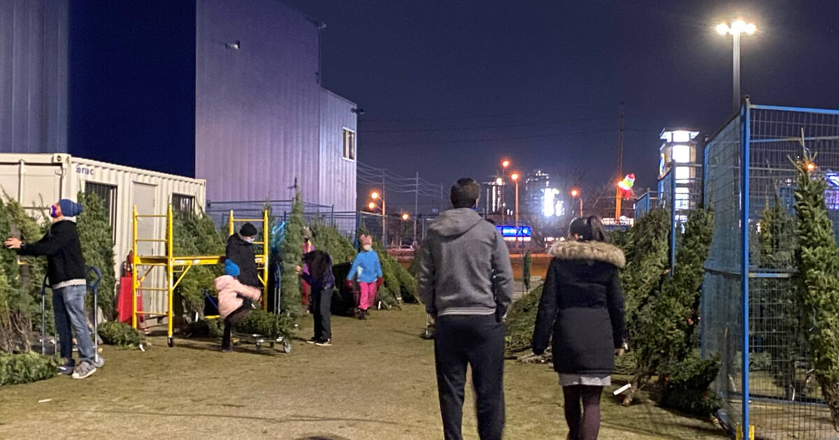 IKEA has been giving away hundreds of free Christmas trees in Toronto