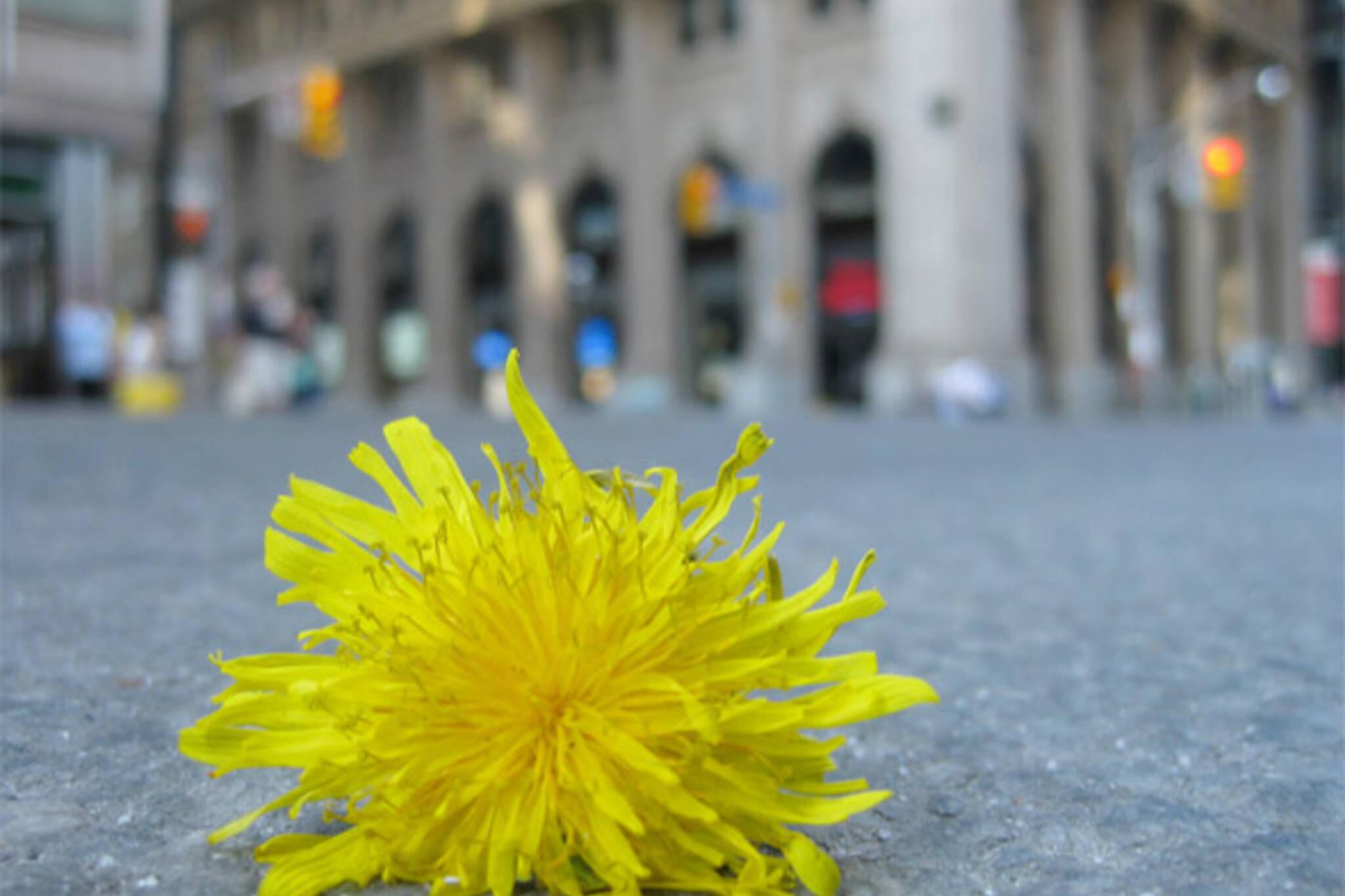 flower on road