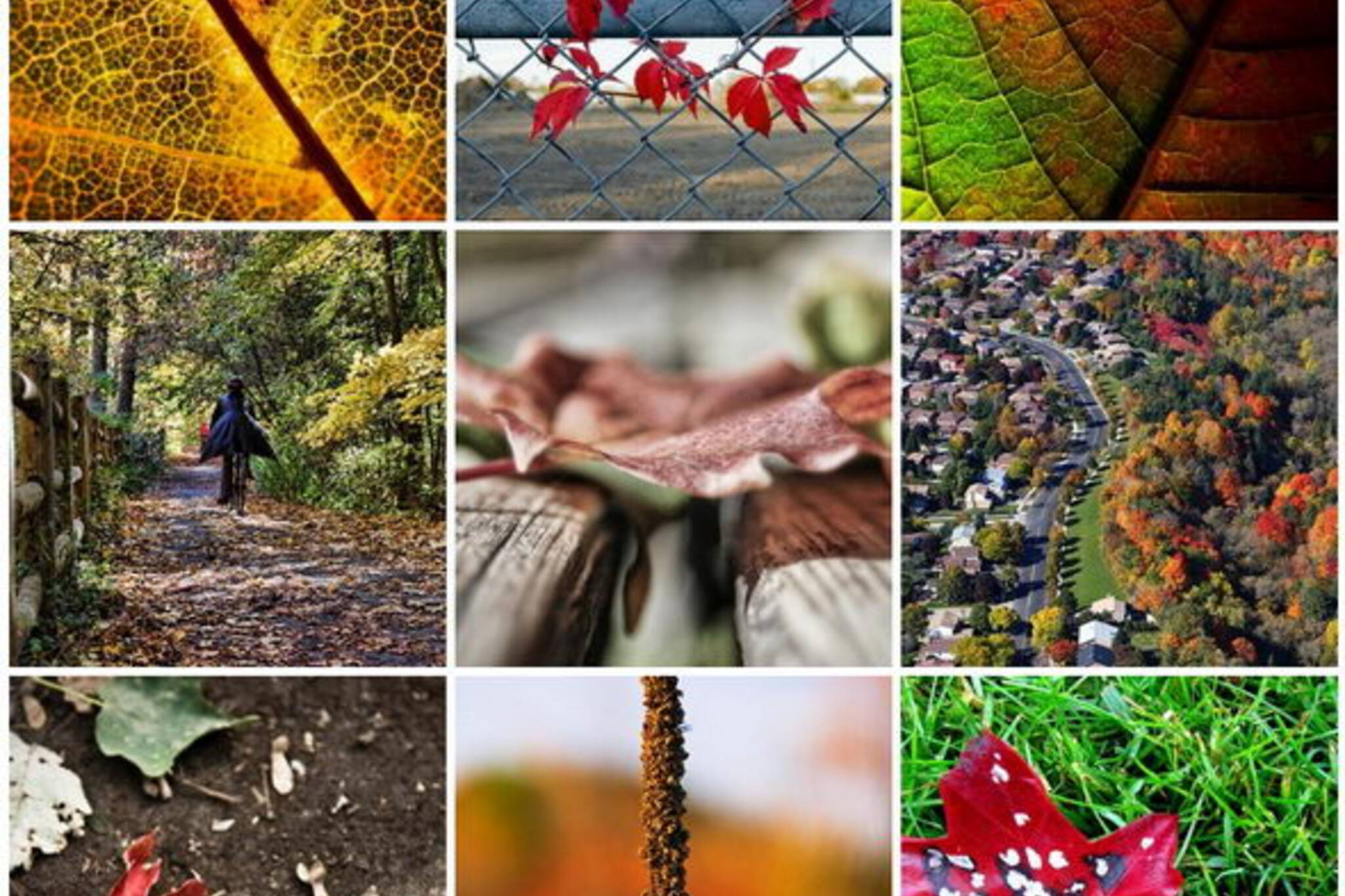 Flickr Forum '08: Fall Colours