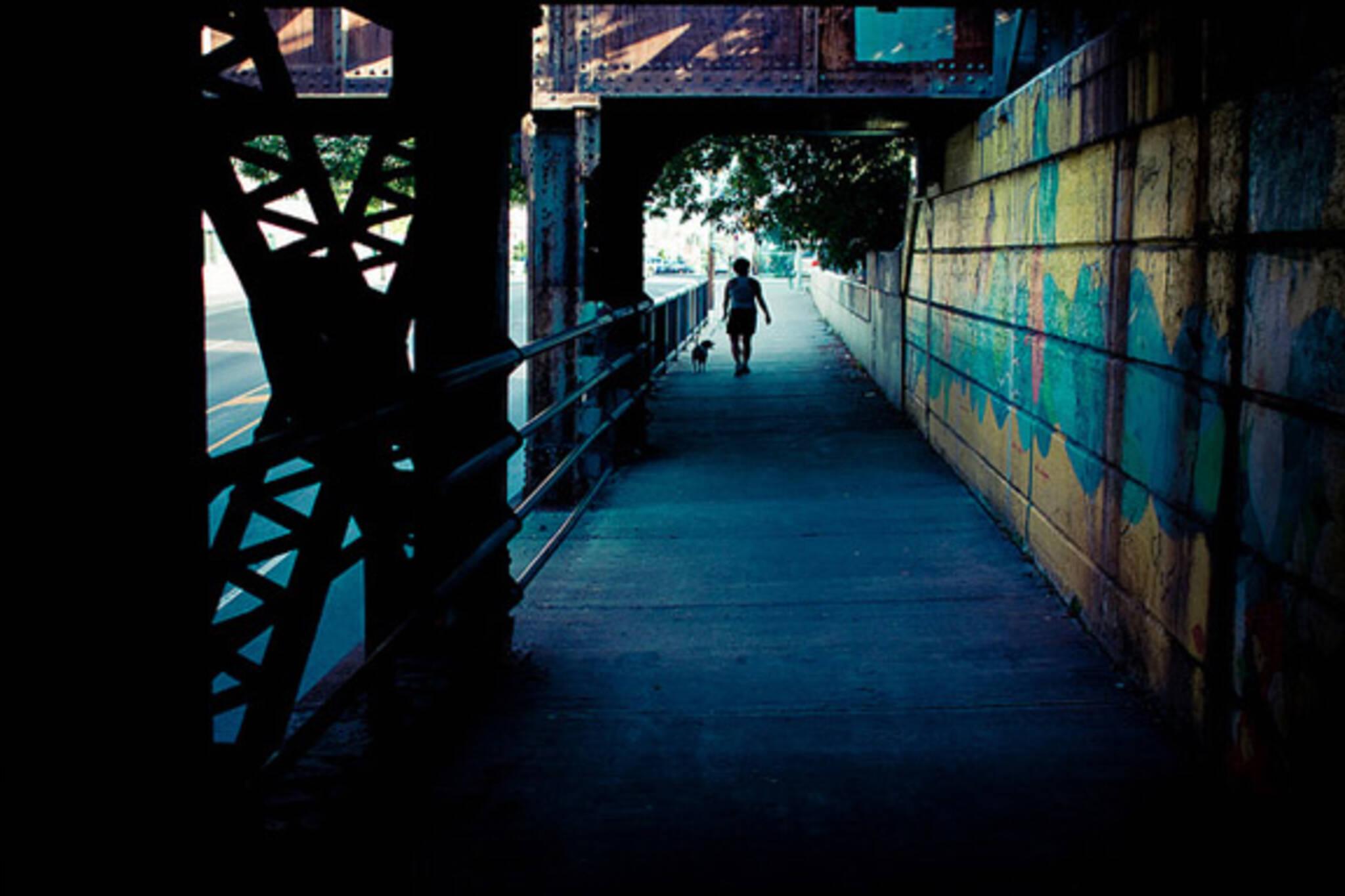 bridge, walk, dog