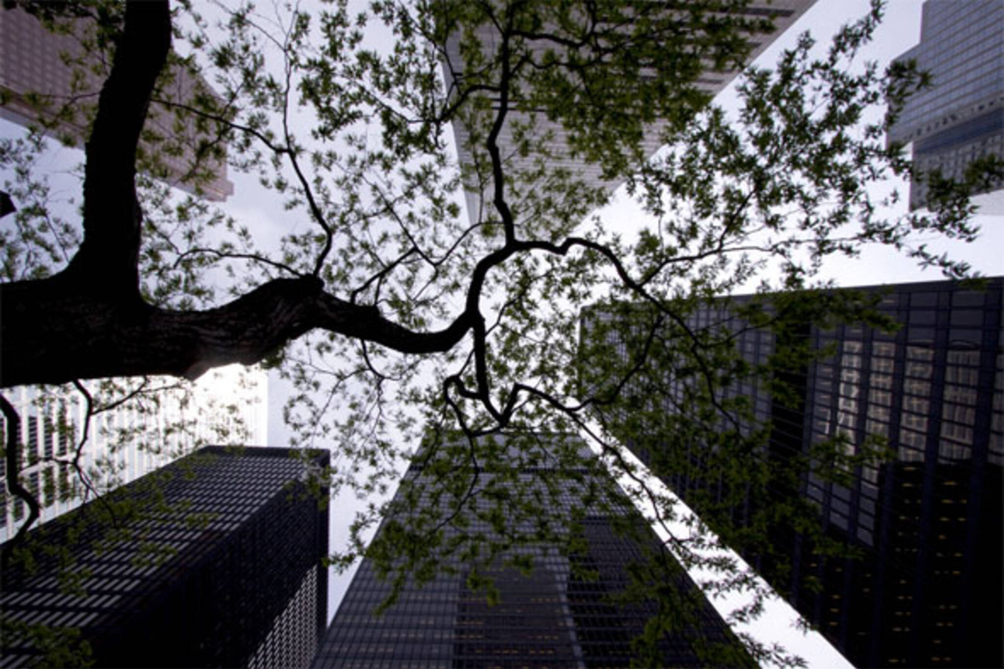 skyscrapers trees