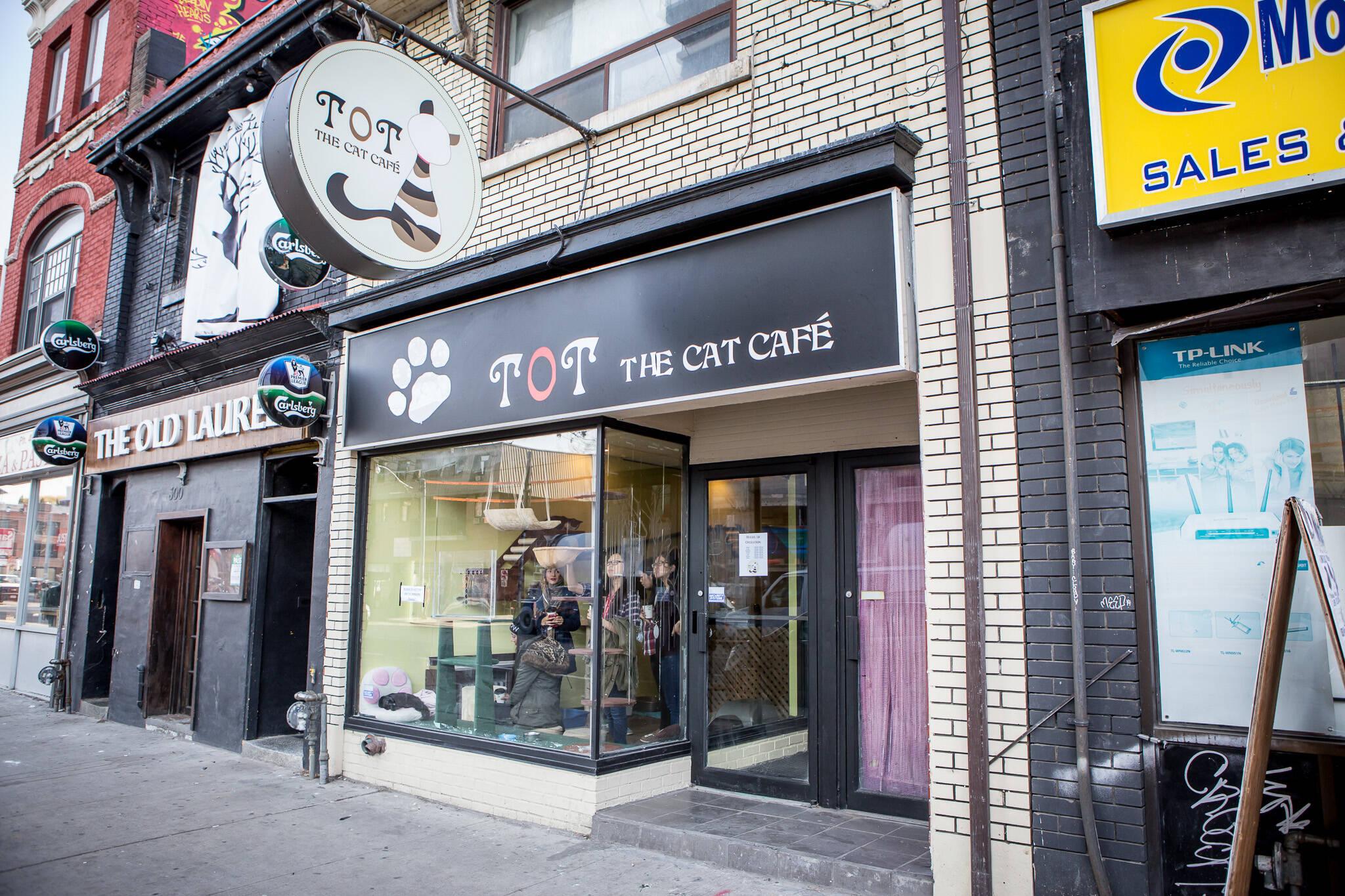 toronto cat cafe