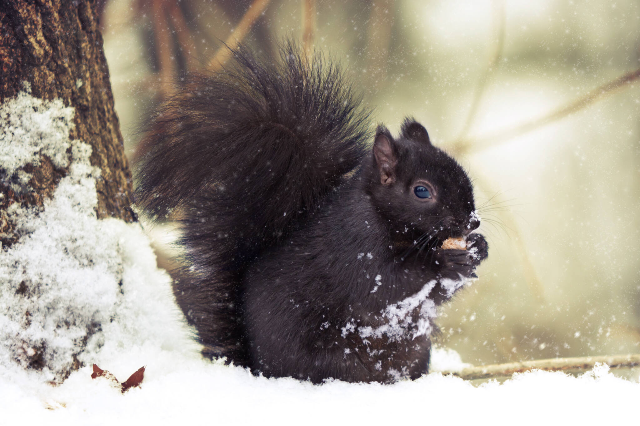 squirrel toronto