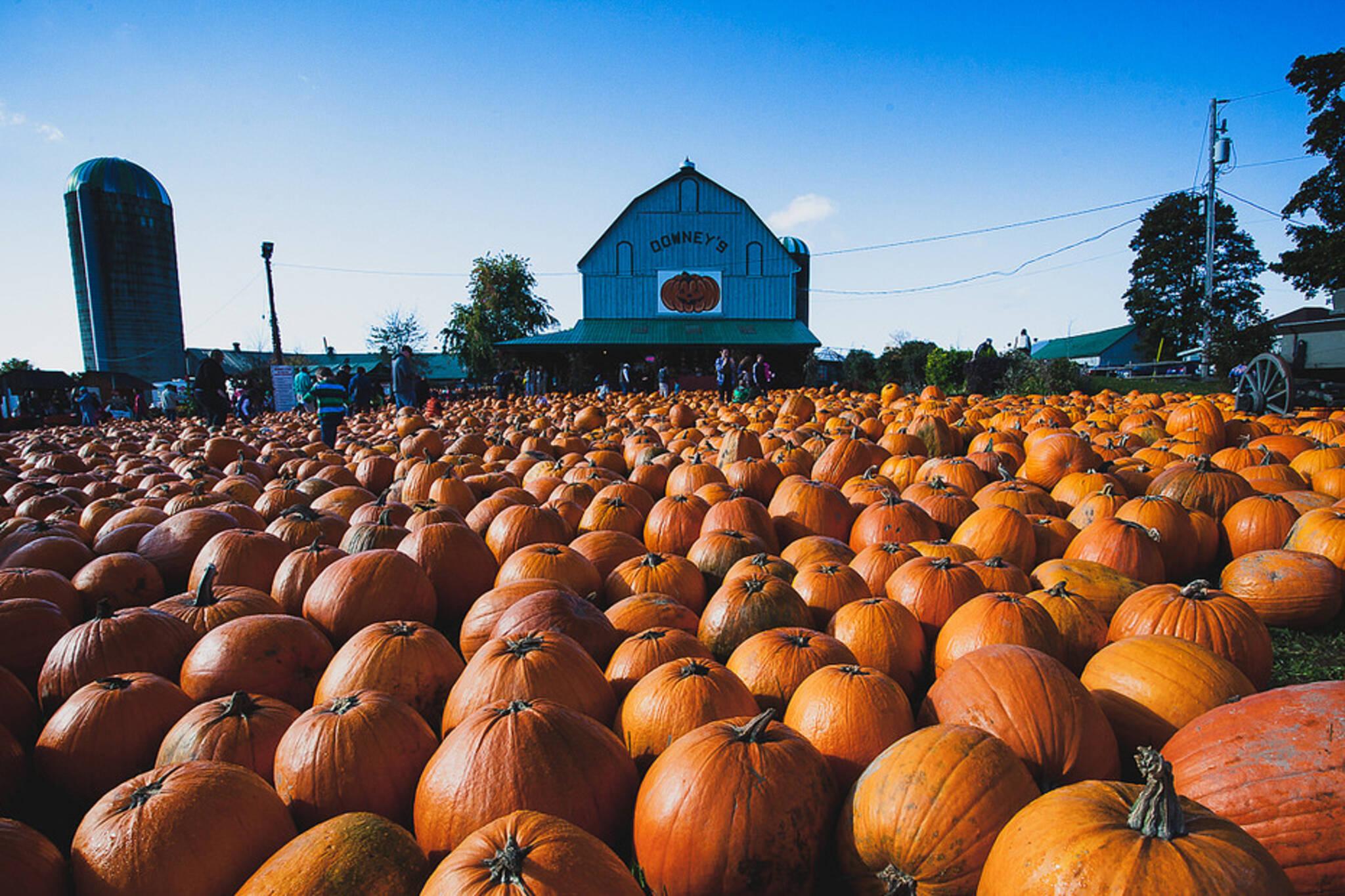 Pumpkin Patch toronto