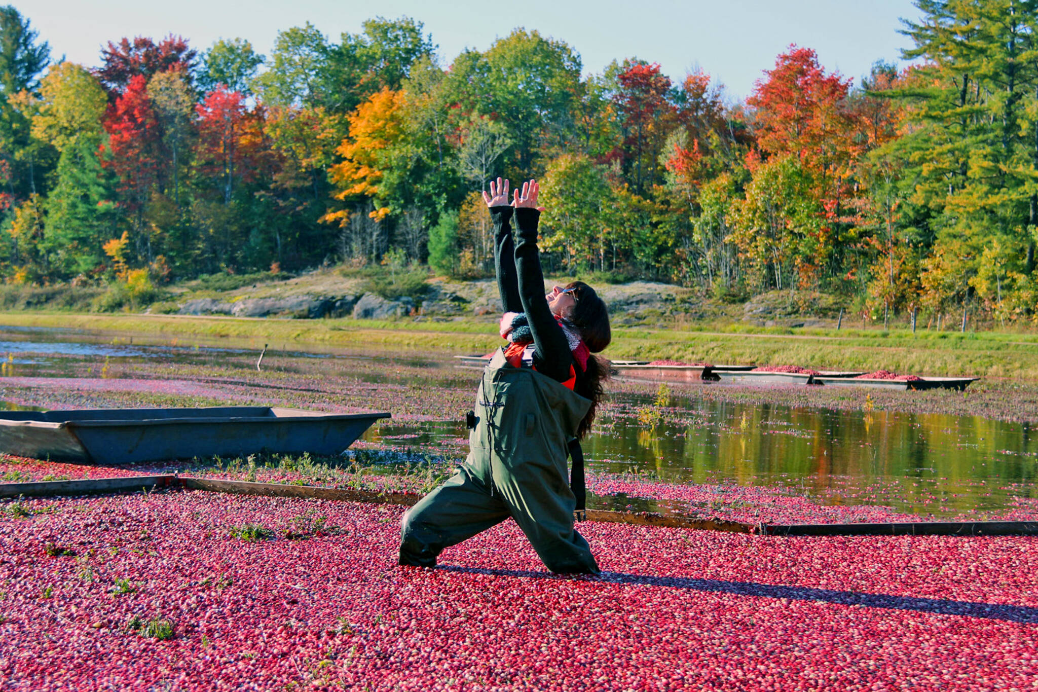 johntons cranberry farm
