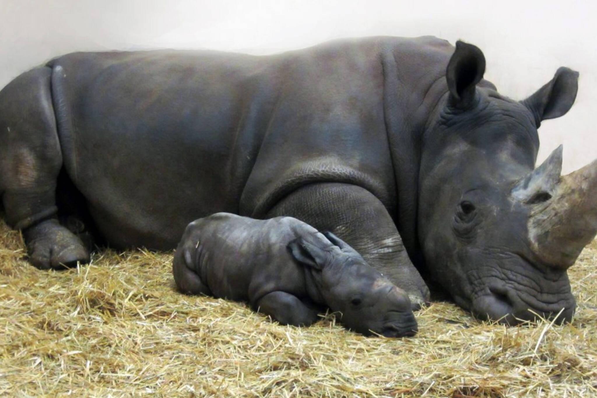 White Rhino zoo