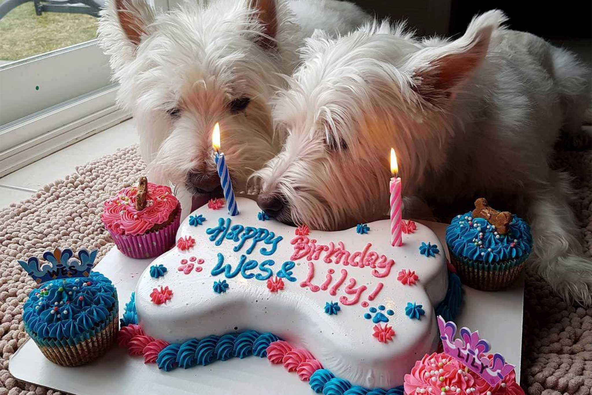 Dog Friendly Birthday Cake Humans Can Eat