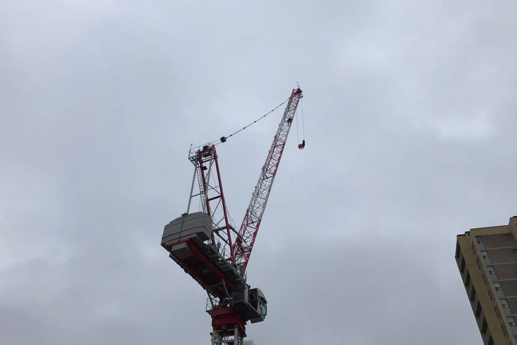 crane girl toronto