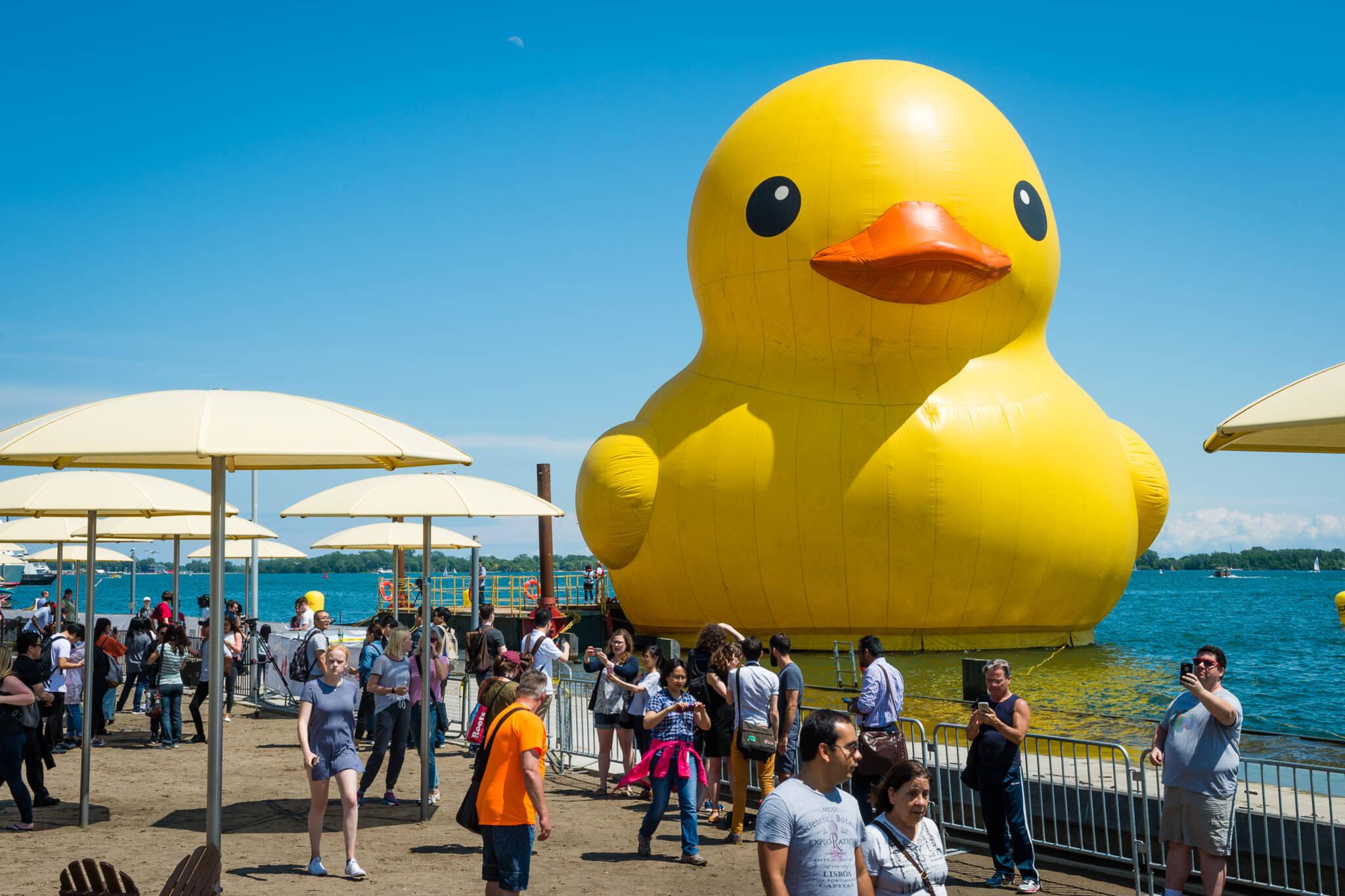 worlds biggest rubber duck