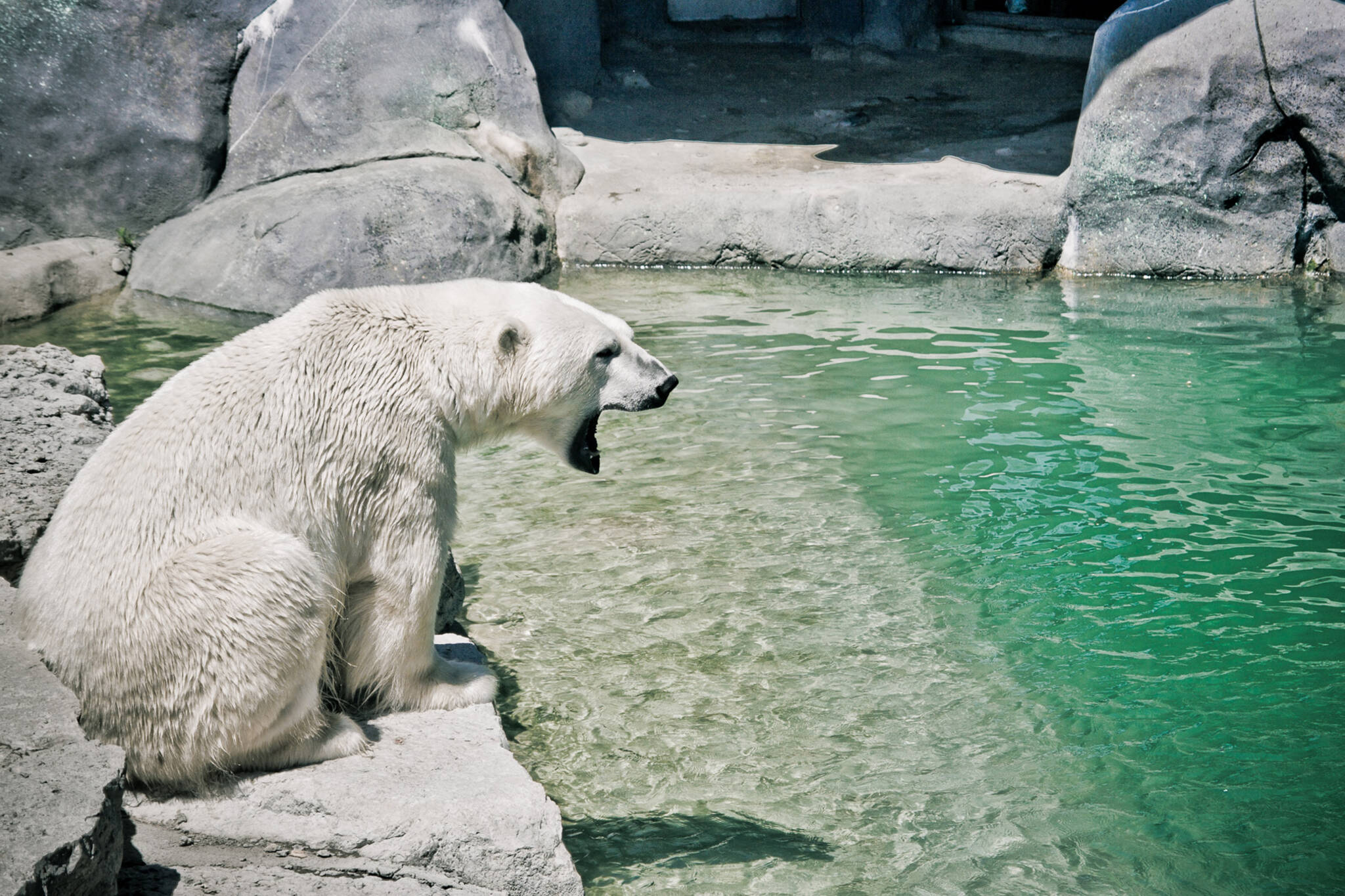 Image result for Toronto Zoo