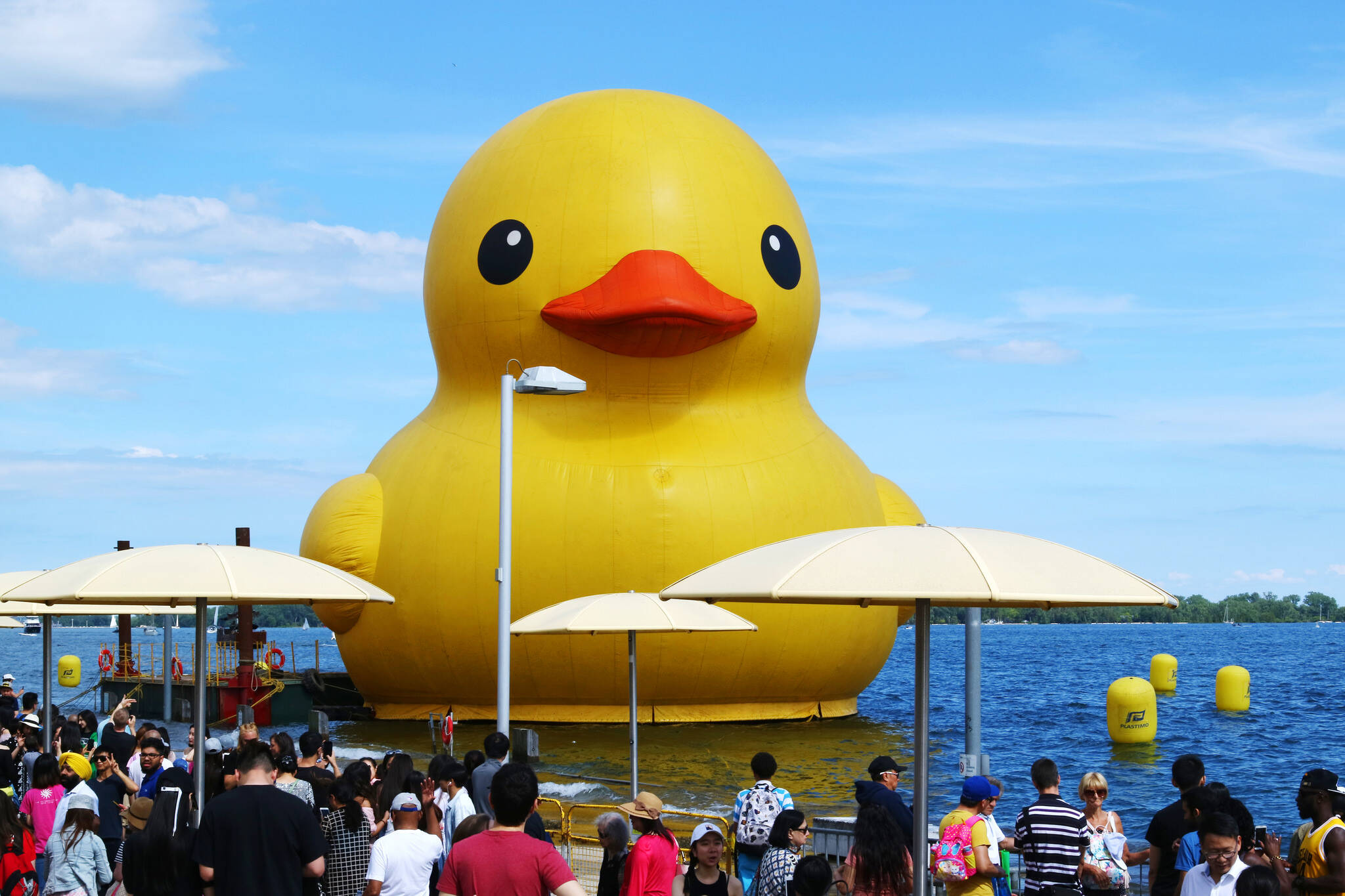 duck toronto