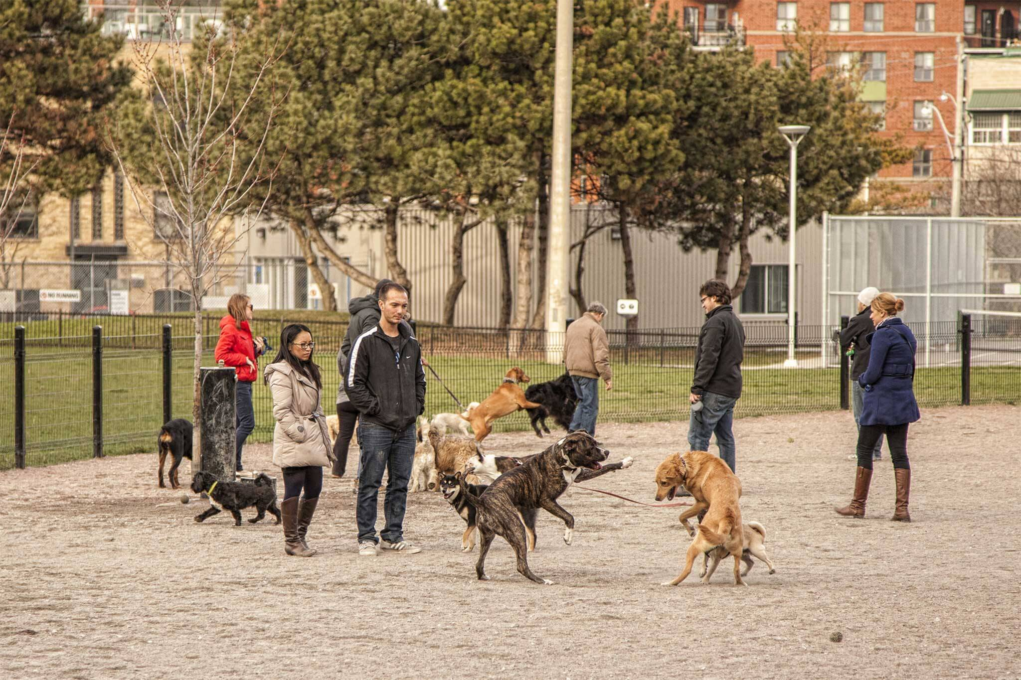 dog parks toronto