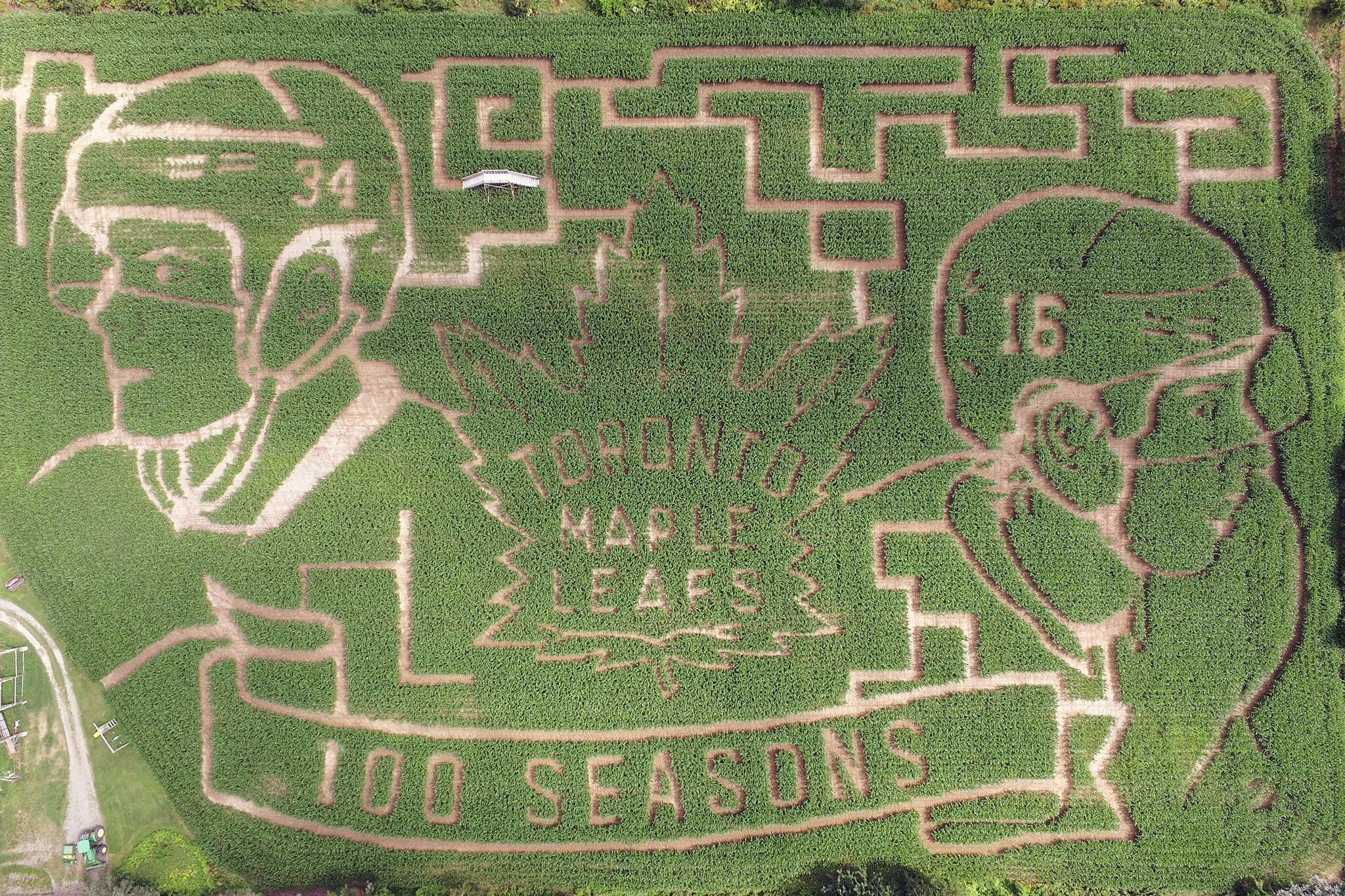 maple leafs corn maze