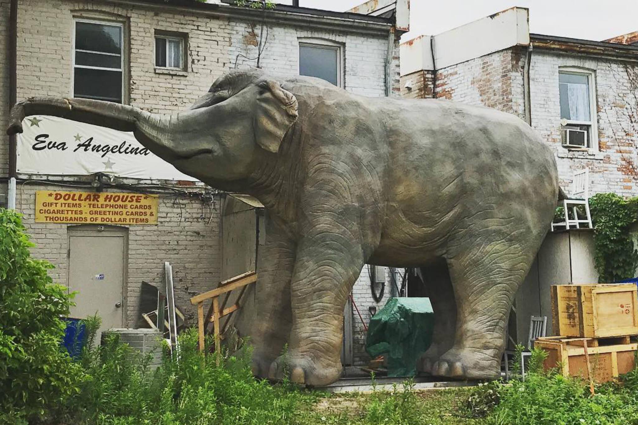 elephant toronto